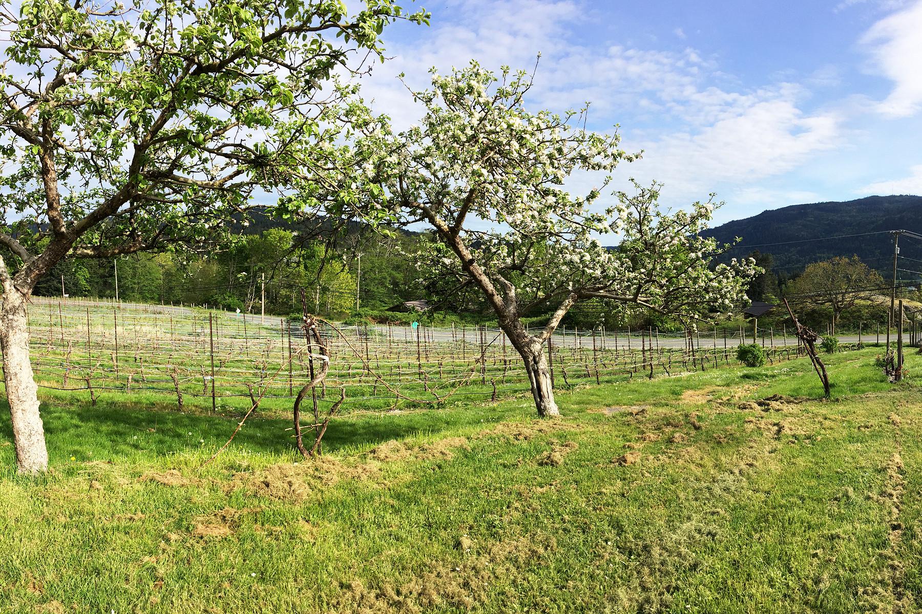 Ферма / ранчо / плантация для того Продажа на Salt Spring Island Vineyards 151 Lee Road Salt Spring Island, Британская Колумбия, V8K 2A5 Канада