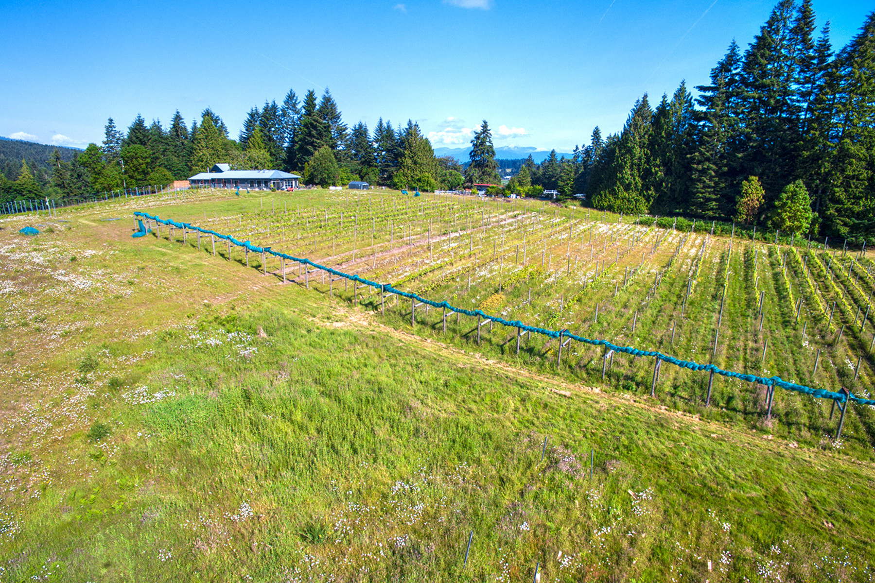 Additional photo for property listing at Glenterra Vineyards 3897 Cobble Hill Road Cobble Hill, British Columbia V0R 1L5 Canada