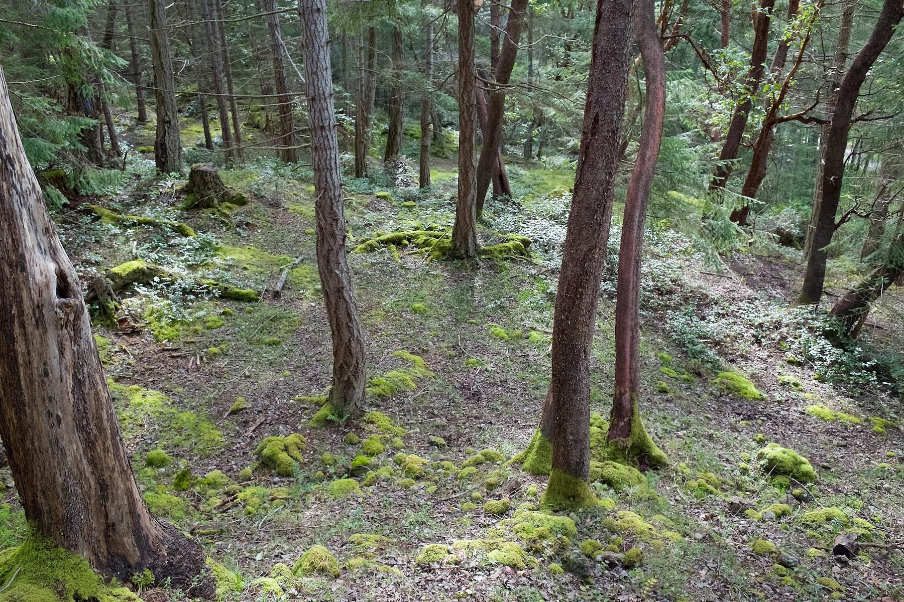 Ilha privada para Venda às Sensational 3.44 Acres Salt Spring Island, Columbia Britanica V8K 1S4 Canadá