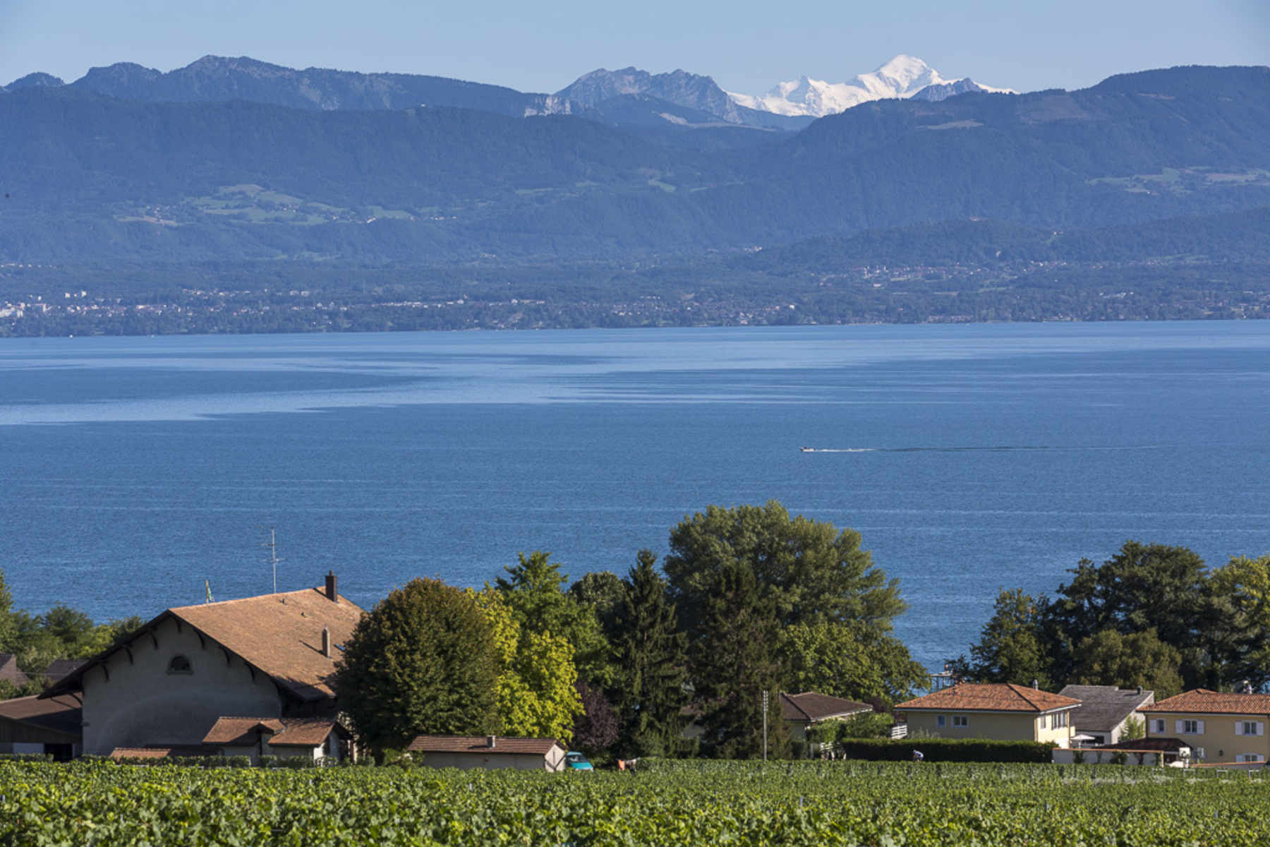 Property For Sale at Property surrounded by vineyards with a stunning view