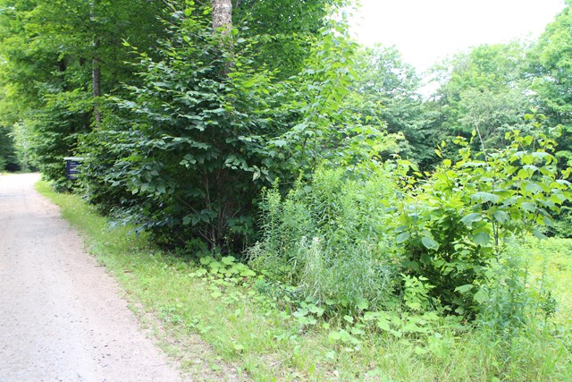 Additional photo for property listing at Building Lot on Pawnee Drive, Hollywood Hills 187 Pawnee Drive Old Forge, New York 13420 United States