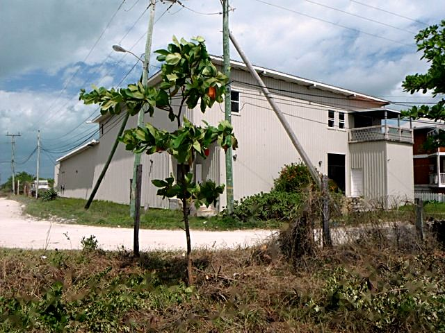 Additional photo for property listing at Stingray San Pedro Town, Ambergris Caye Belice