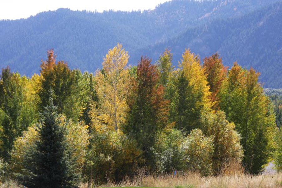 Land for Sale at Coveted Land North Of Ketchum 245 Eagle Creek Road Ketchum, Idaho 83340 United States