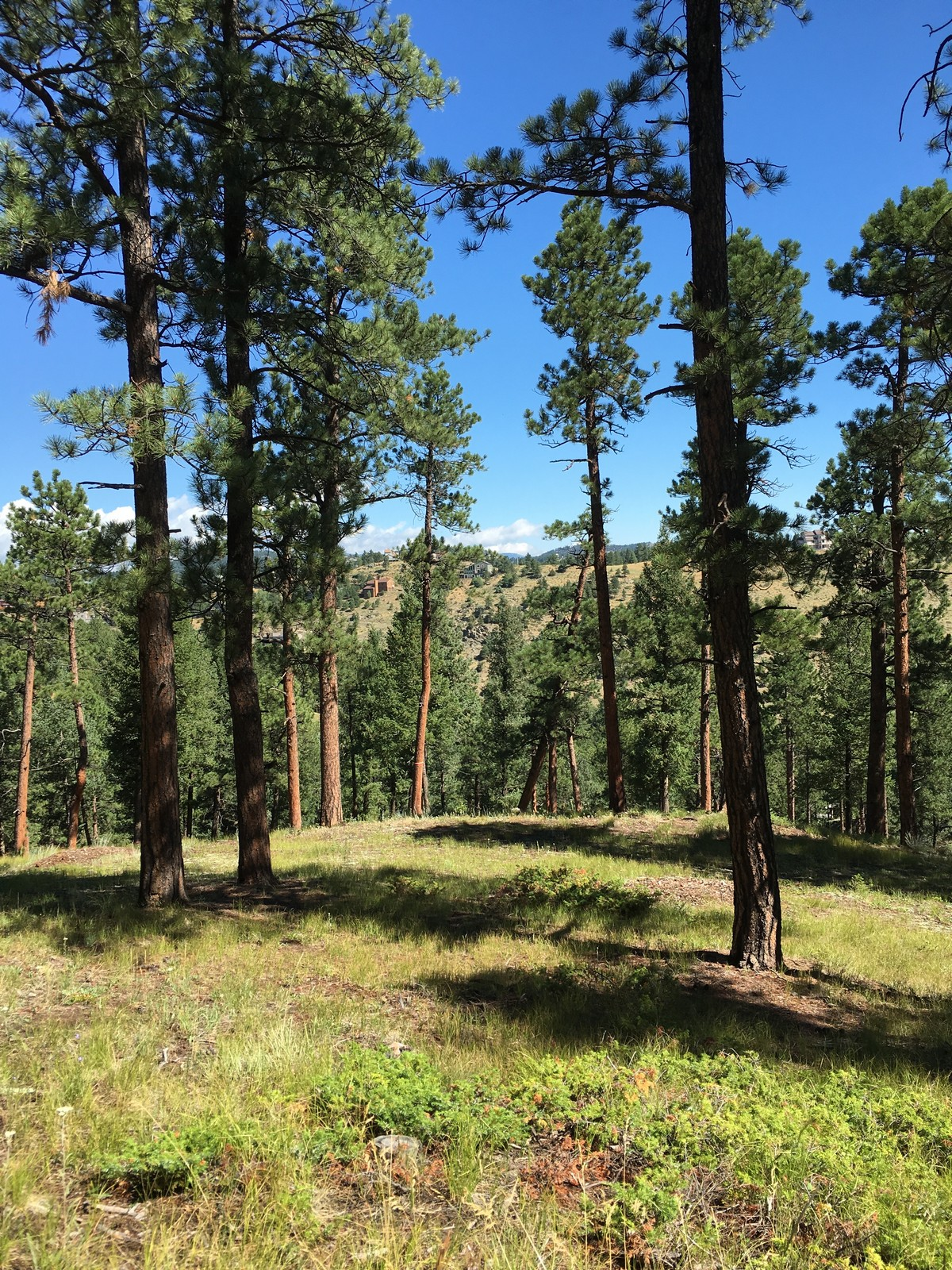 One of the last great land opportunities in Evergreen 3325 Timbergate Trail Evergreen, Colorado 80439 Estados Unidos