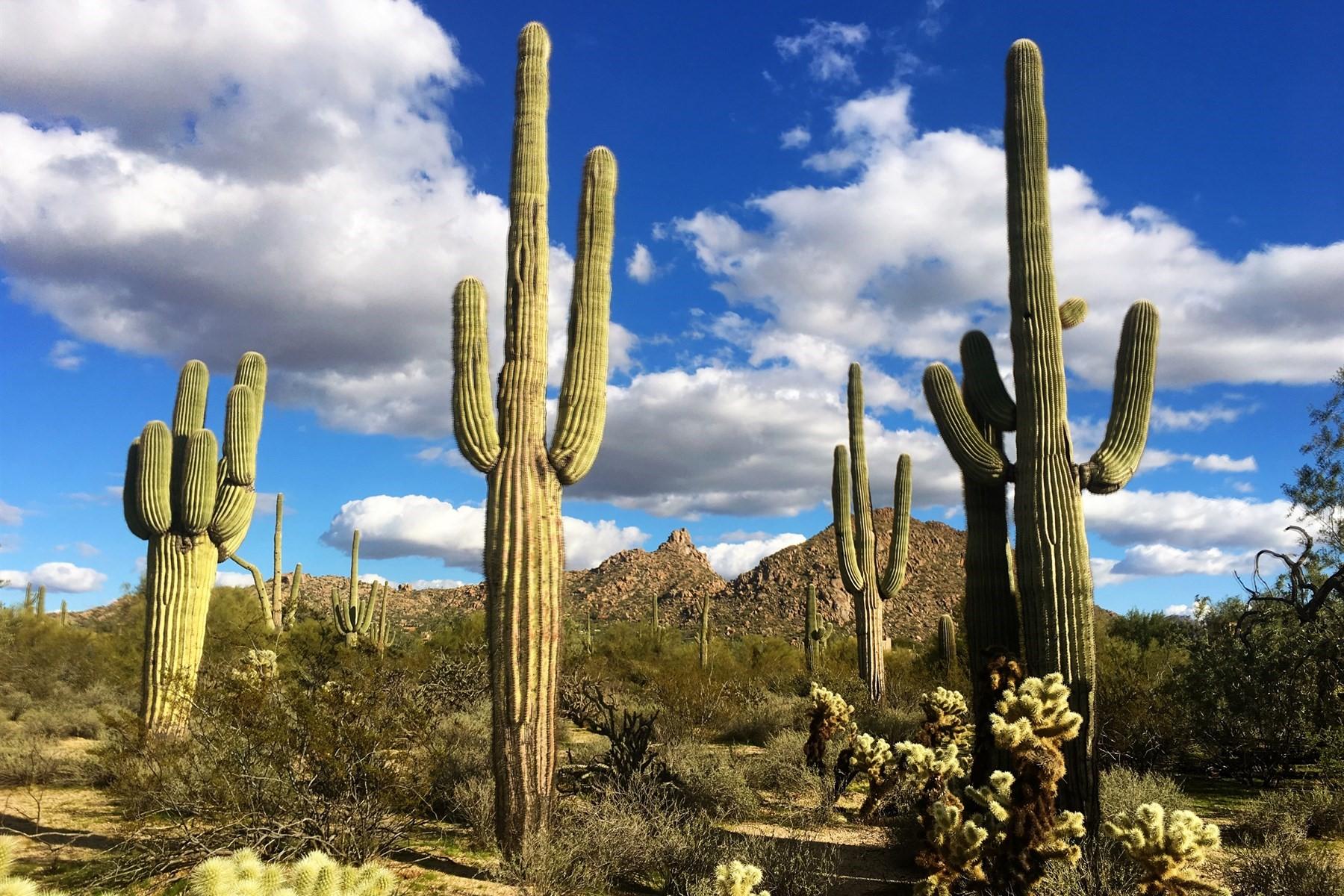 Terreno para Venda às Prestigious Section 31 five-acre homesite with equestrian privileges 27087 N 90th St Scottsdale, Arizona, 85262 Estados Unidos