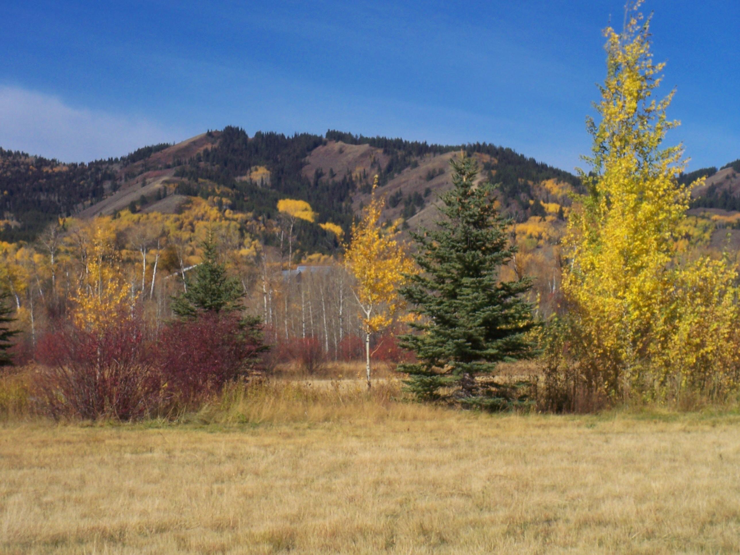 Terreno por un Venta en Victor Treed Site, Borders Open Space 9578 Hiddenwaters LN Victor, Idaho, 83455 Jackson Hole, Estados Unidos