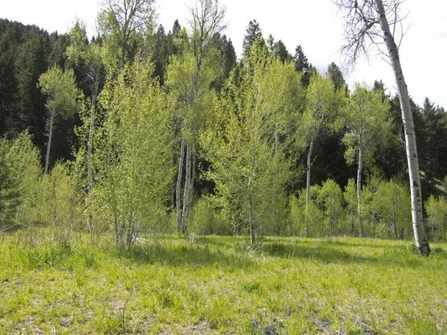 Land for Sale at 20 Acres in Parker Gulch 921 Parker Gulch Road Sun Valley, Idaho 83353 United States
