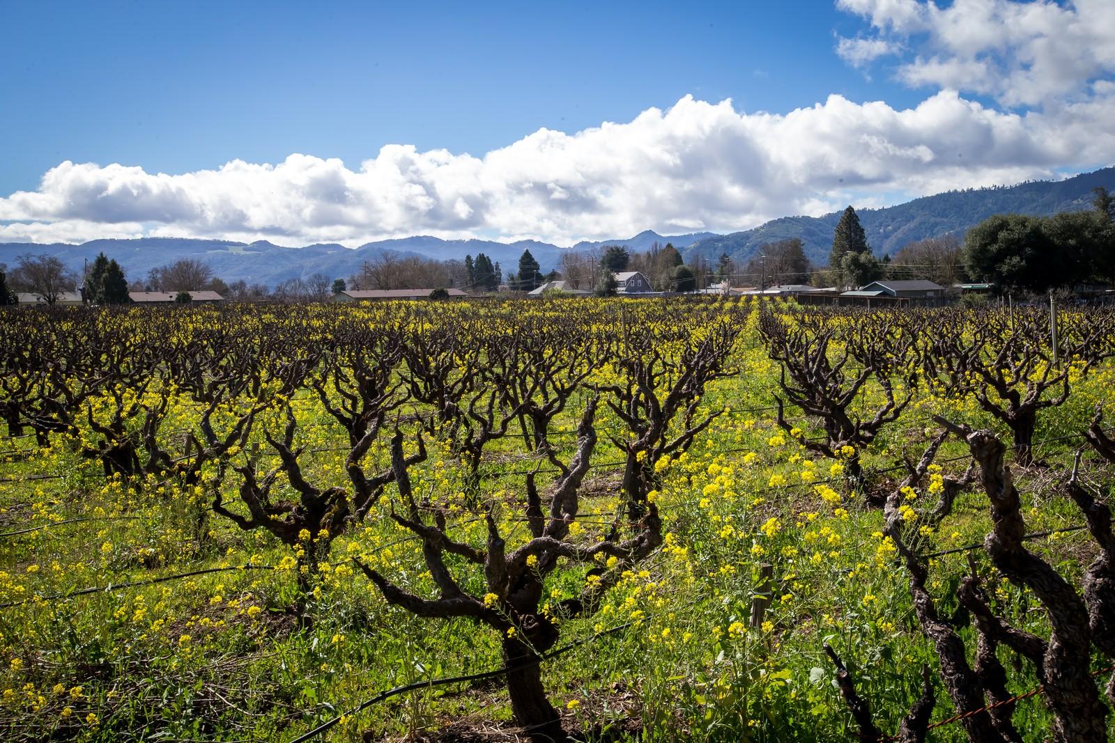 Ferme / Ranch / Plantation pour l Vente à Lucchesi Ranch 1251 Sanford Ranch Road Talmage, Californie 95481 États-Unis