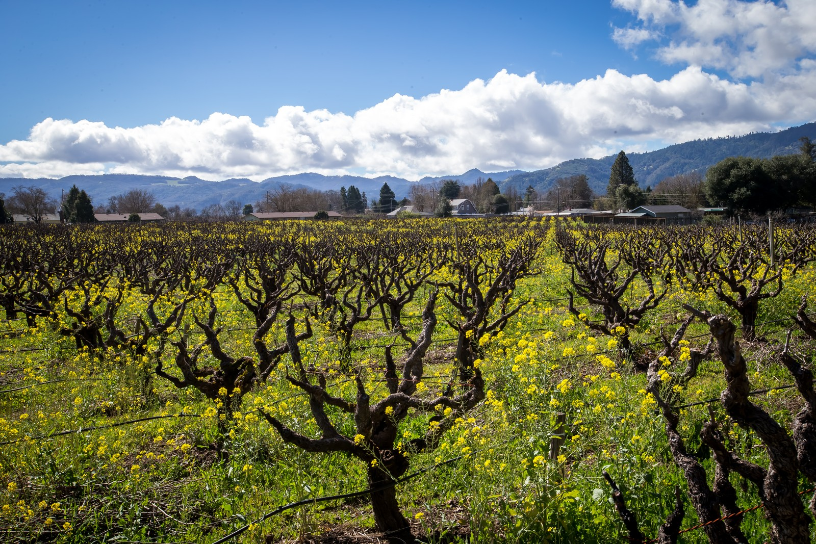 Farm / Ranch / Plantation for Sale at Lucchesi Ranch 1251 Sanford Ranch Road Talmage, California 95481 United States