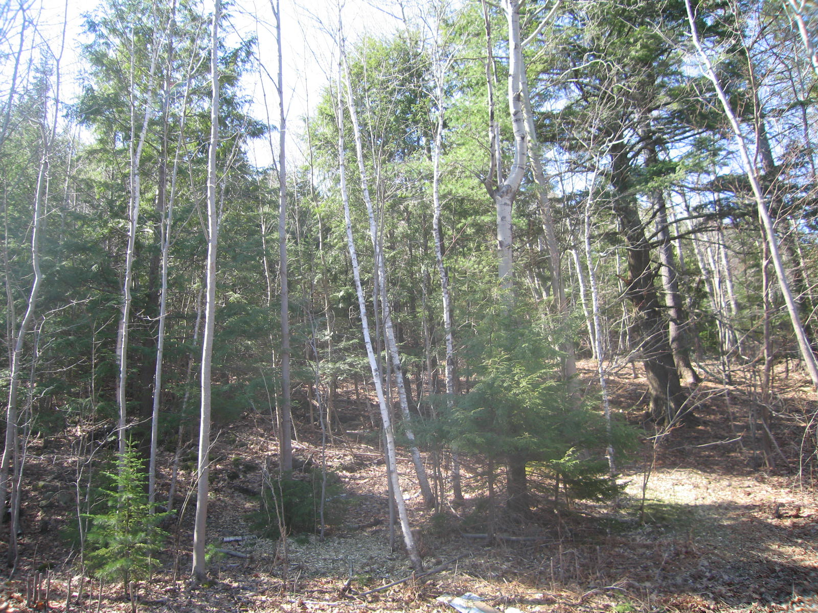 Land for Sale at Cromwell Harbor Land 0 Cromwell Harbor Road Bar Harbor, Maine, 04609 United States