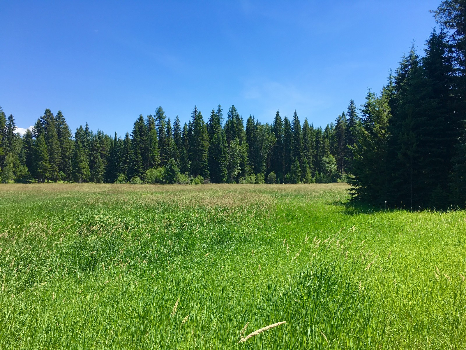 Additional photo for property listing at 146 Lupfer Meadows Pl , Whitefish, MT 59937 146  Lupfer Meadows Pl Whitefish, Montana 59937 United States