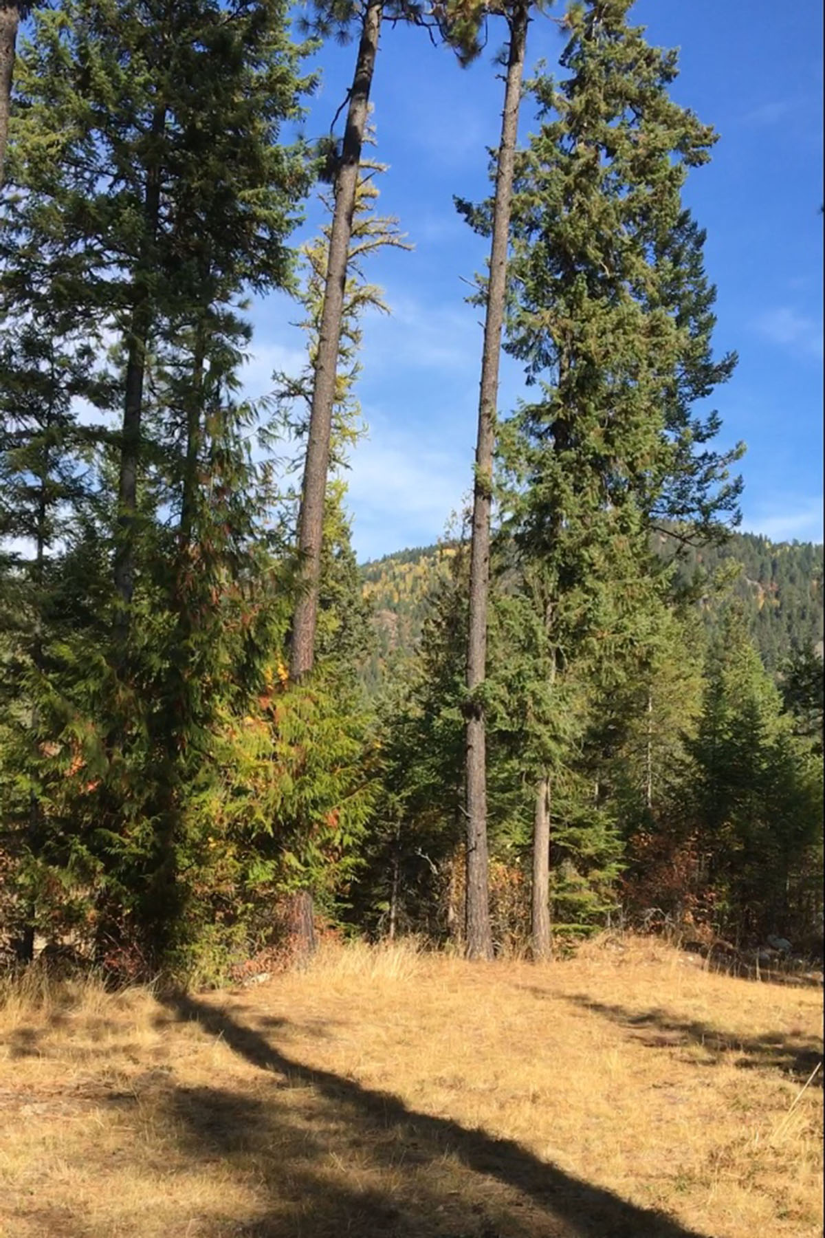 Additional photo for property listing at Build Your Dream on Over an Acre With Views 44 Mariposa Ct Sandpoint, Idaho 83864 United States