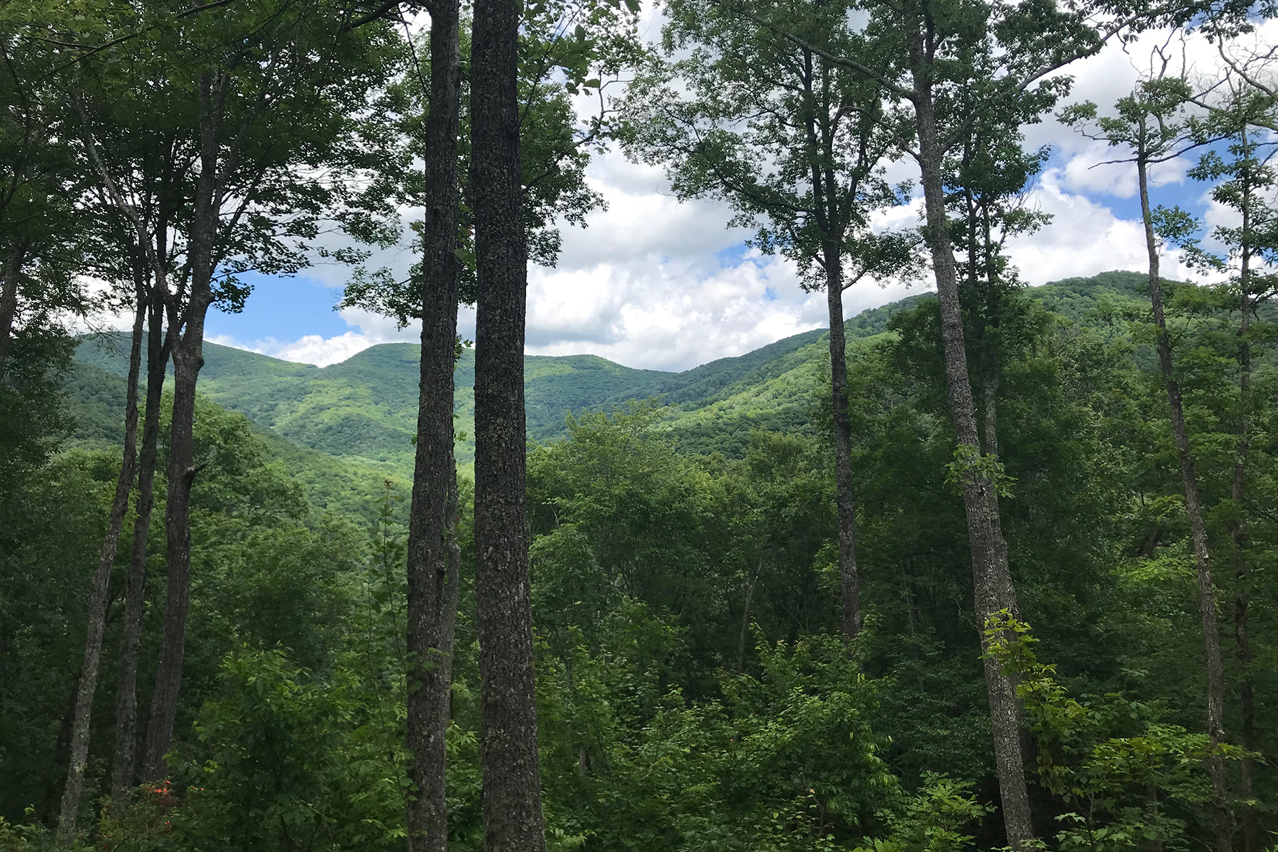 Land for Active at BALSAM MOUNTAIN PRESERVE 257 Tote Rd , 257 Sylva, North Carolina 28779 United States