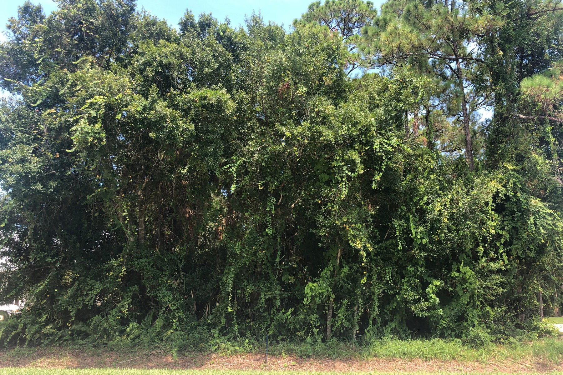 Land for Sale at Great Spot for Your Country Paradise! 6286 7th Street Vero Beach, Florida 32968 United States