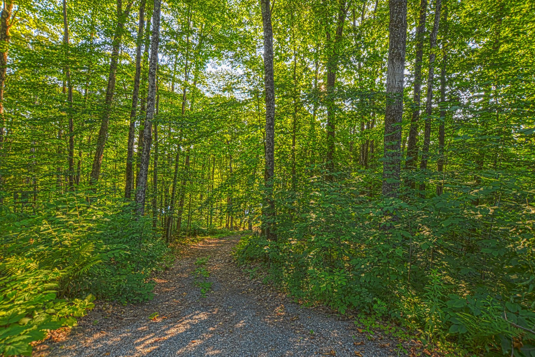 Land for Sale at 35 Acres in Topsham 126 Downing Rd Topsham, Vermont 05076 United States