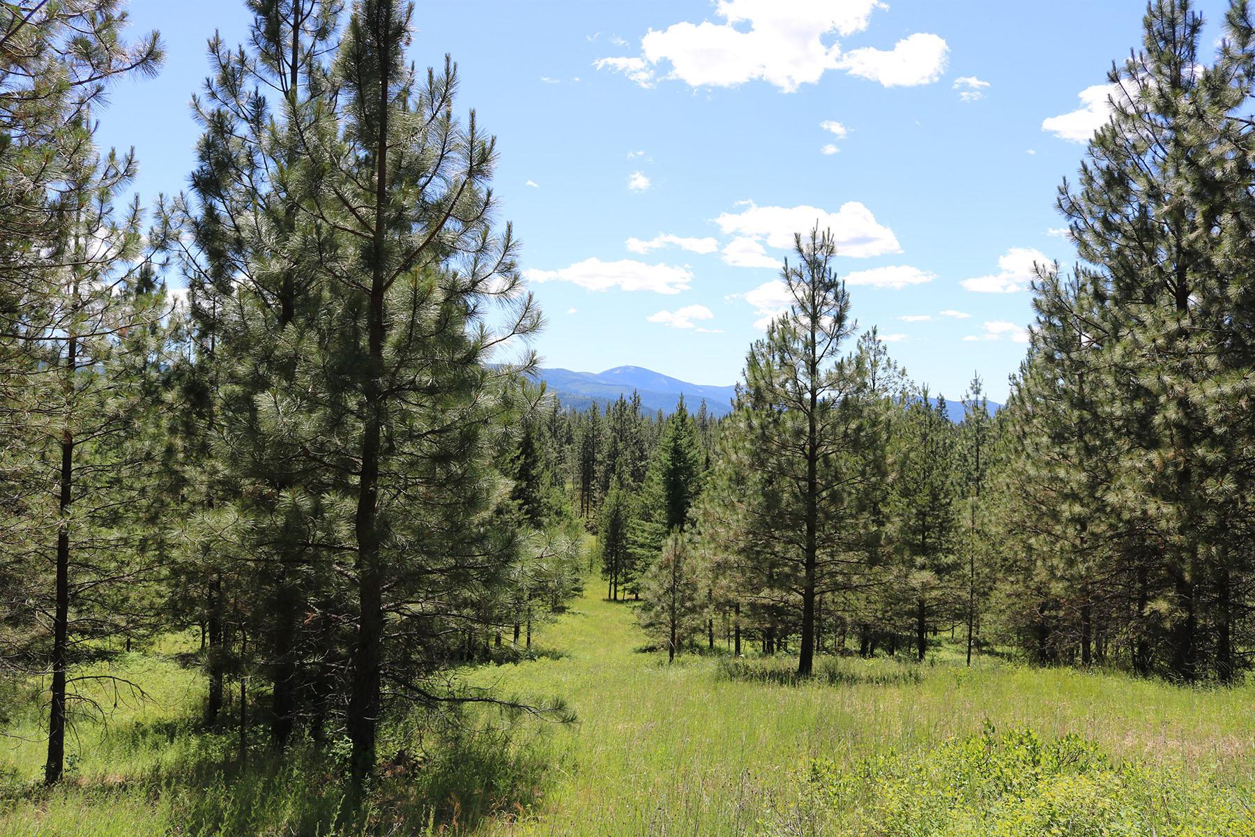 Terreno por un Venta en Spectacular views from this 10 acre heavily wooded parcel NNA Rogstad Powerline Rd Blanchard, Idaho, 83804 Estados Unidos