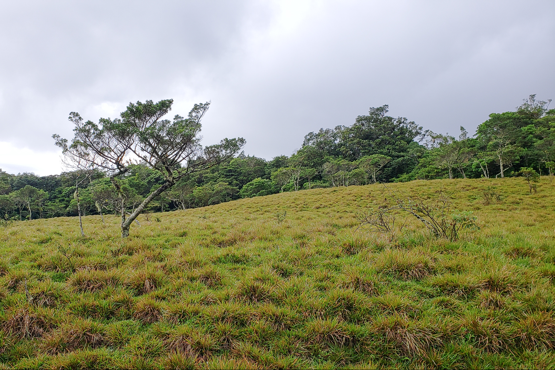 Land for Sale at San Isidro Heredia Fresh Climate 3.3ha Parcel San Isidro, Heredia Costa Rica