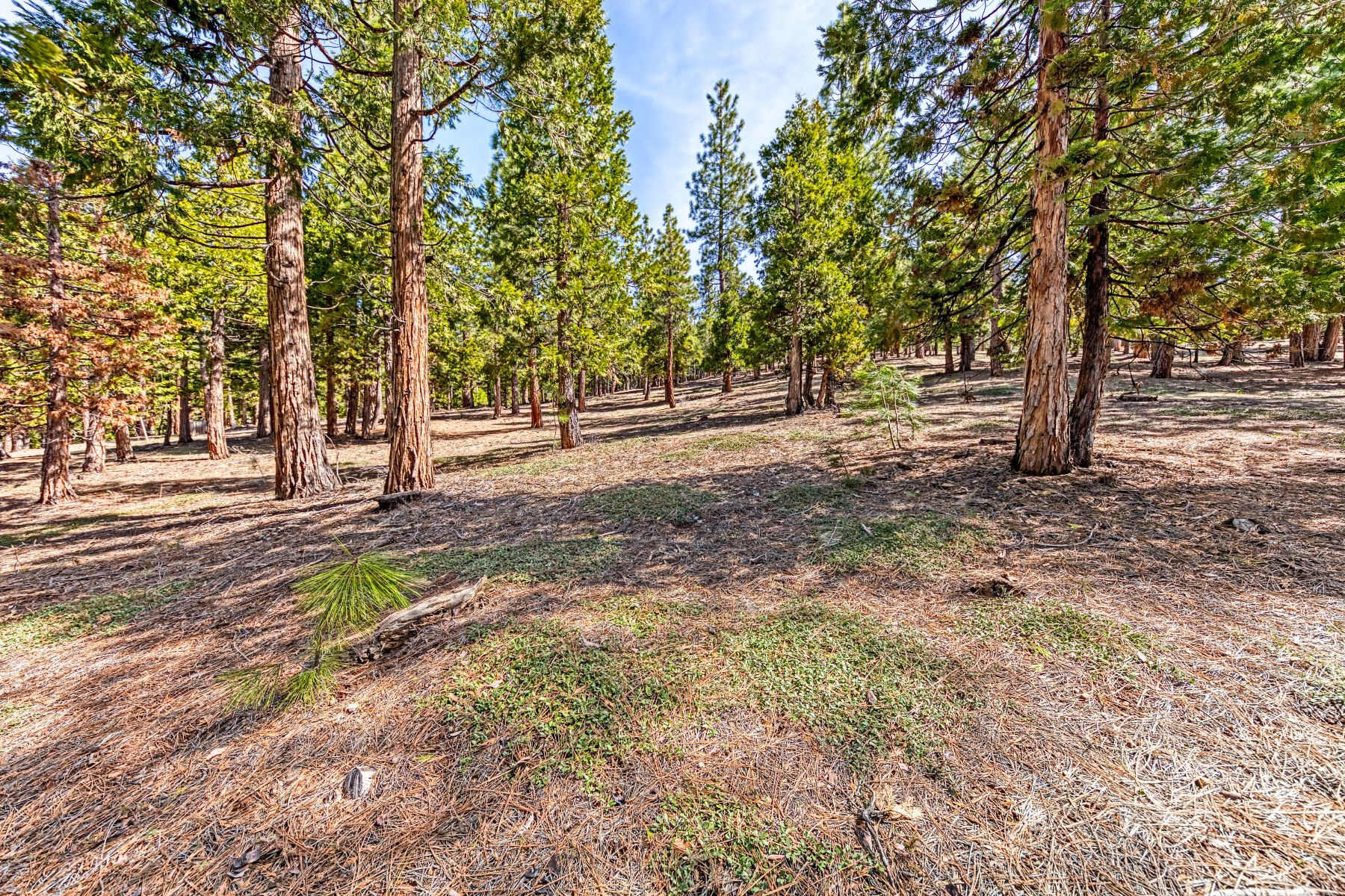 Land for Active at 696 Blacktail Ridge, Portola, CA, 96122 696 Blacktail Ridge Portola, California 96122 United States