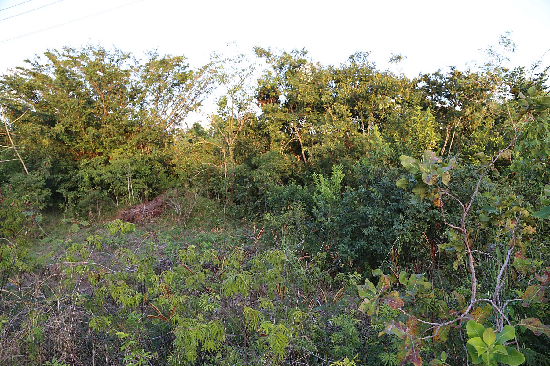 Additional photo for property listing at 3 Acres in Burrell Boom Burrell Boom, Belize Belize