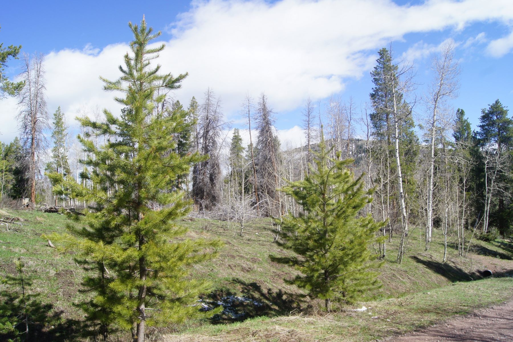 土地 のために 売買 アット Stagecoach Morningside Lot 32487 Ute Trail, Oak Creek, コロラド 80467 アメリカ