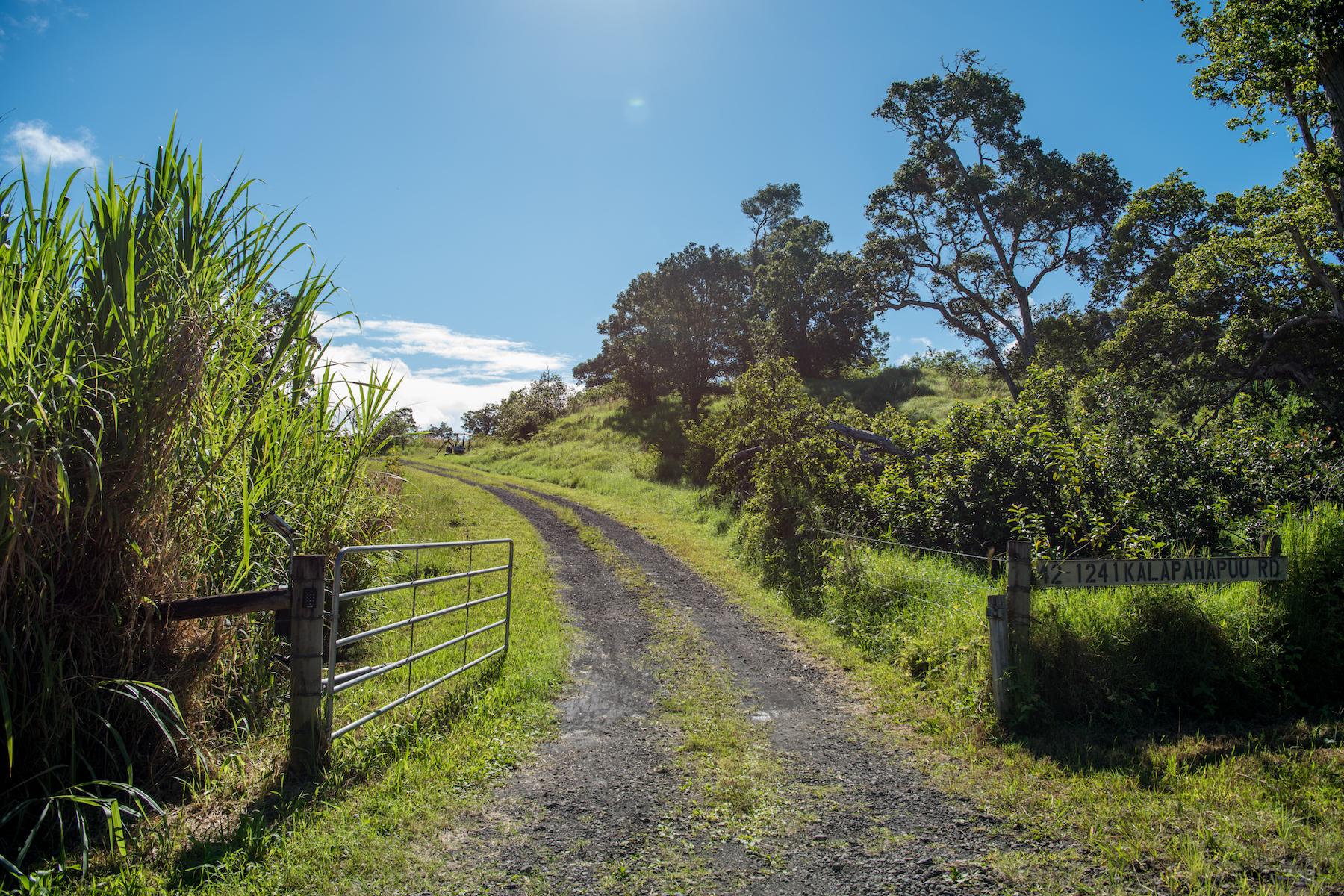 Land for Active at Lot #7 Kukaiau Paauilo, Hawaii 96776 United States