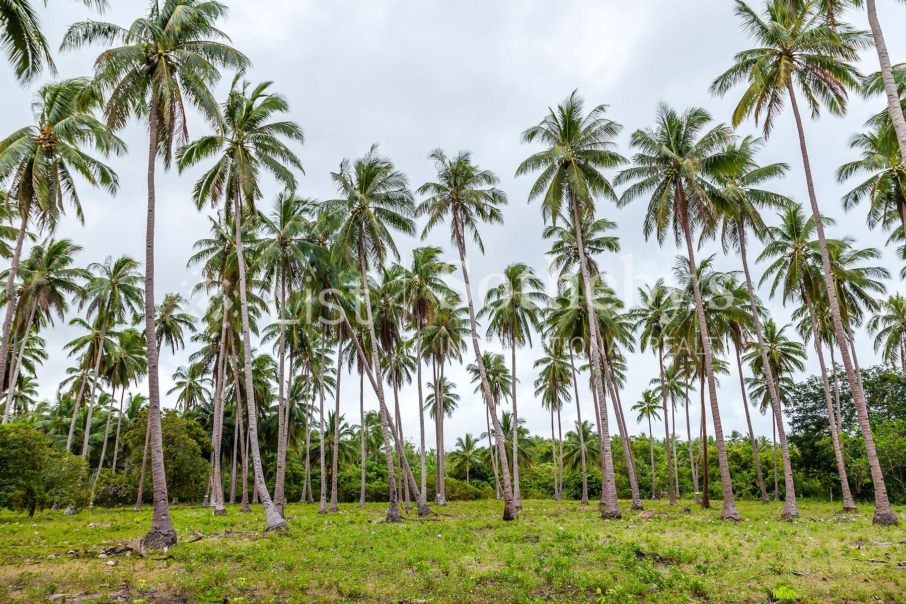 Additional photo for property listing at Brgy Alimanguan   San Vicente Palawan  San Vicente, Palawan 5309 Philippines