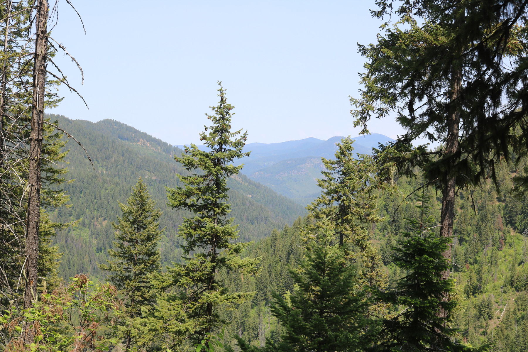 Land for Sale at Western Adventure No 2 22a Lakeview Cutoff Rd Lakeview, Idaho 83803 United States
