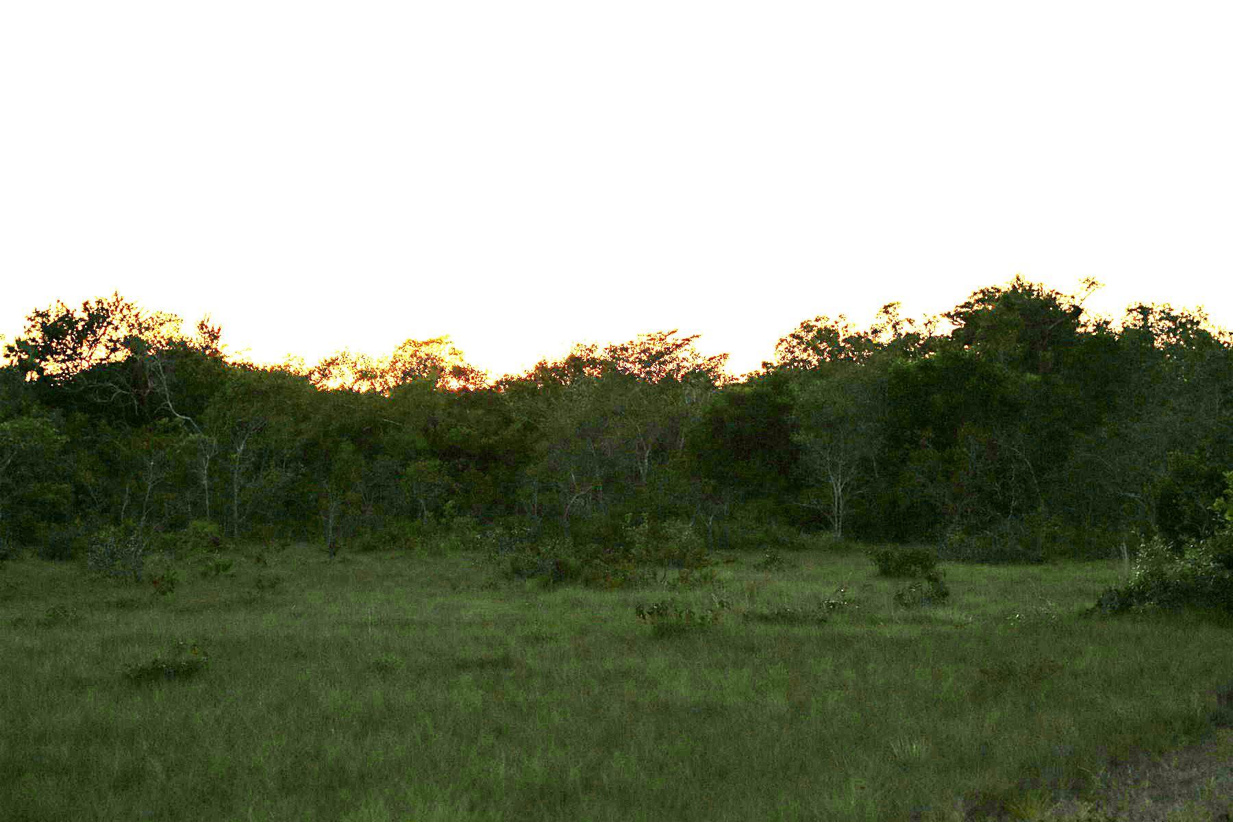 Đất đai vì Bán tại 3 Acres in Burrell Boom Burrell Boom, Belize, Belize