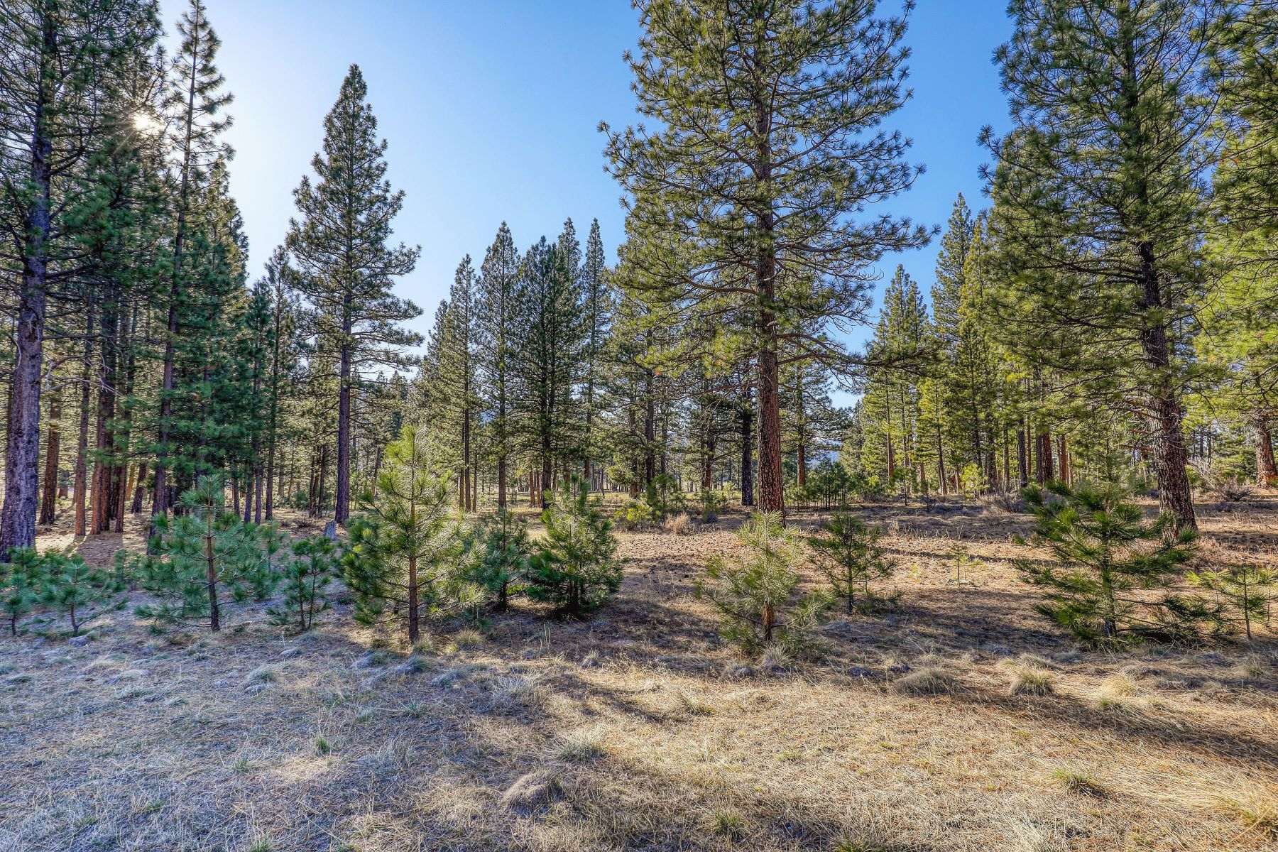Additional photo for property listing at 709 Redtail Loop Clio California 96106 709 Redtail Loop Clio, California 96106 United States
