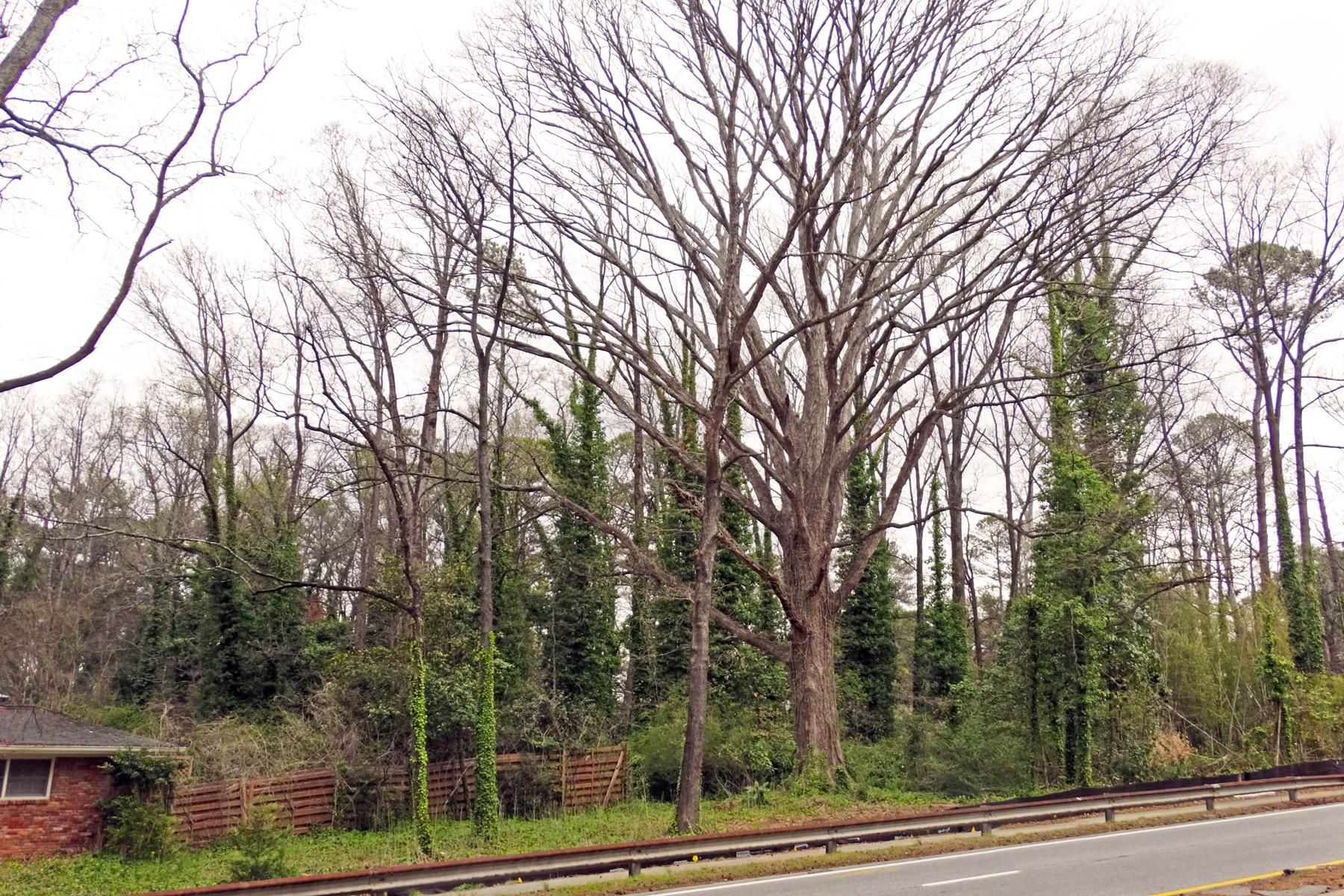 토지 용 매매 에 Great Opportunity To Build In An Affluent Neighborhood 3061 Northside Parkway Atlanta, 조지아 30327 미국