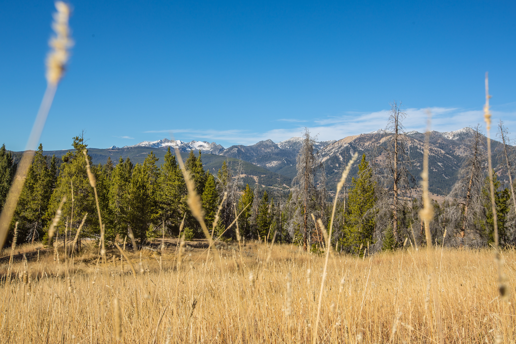 Additional photo for property listing at Great Horn Ranch 40 Acres Great Point Road Big Sky, Montana 59716 United States