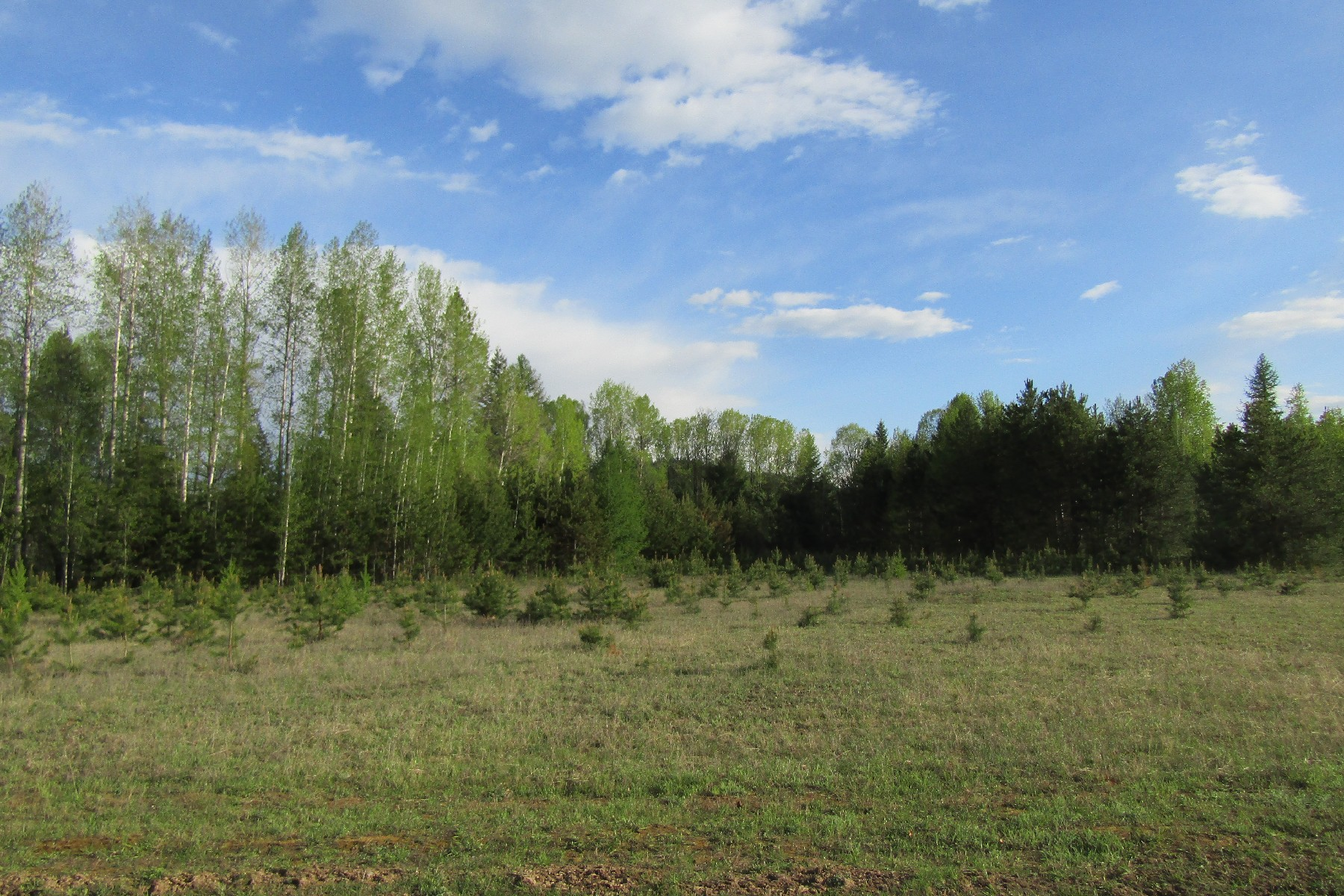 Land for Sale at Private 5 acres With Pasture & Timber 525 All Seasons Road Naples, Idaho 83847 United States