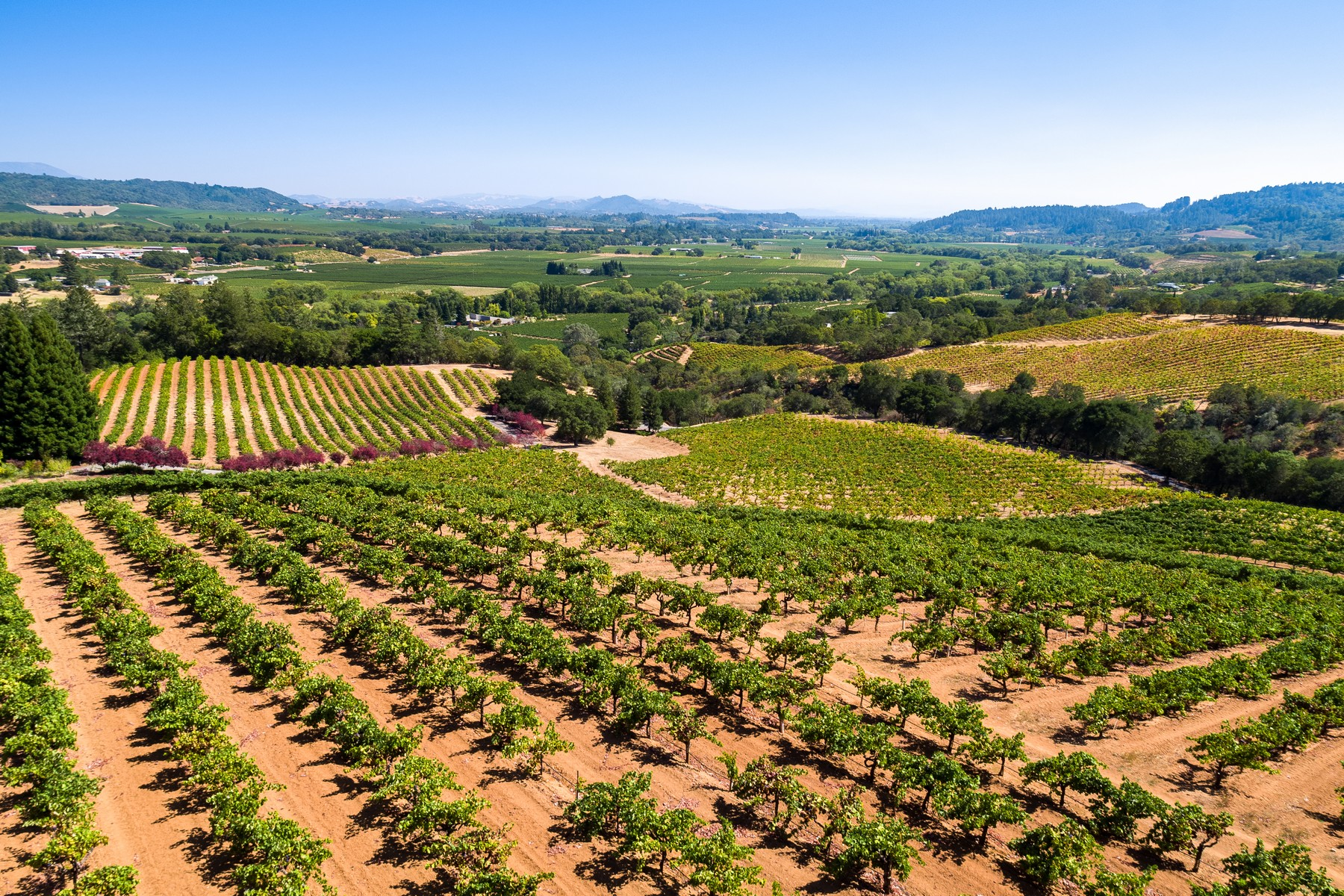 Vineyard Real Estate por un Venta en 6351-6620 West Dry Creek Road Healdsburg, California 95448 Estados Unidos