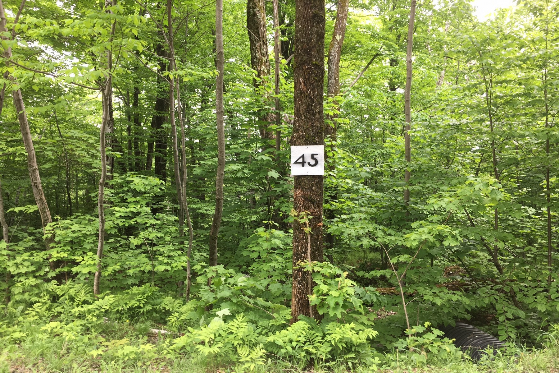 Land for Sale at Birch Hill Road Windham, Vermont 05359 United States
