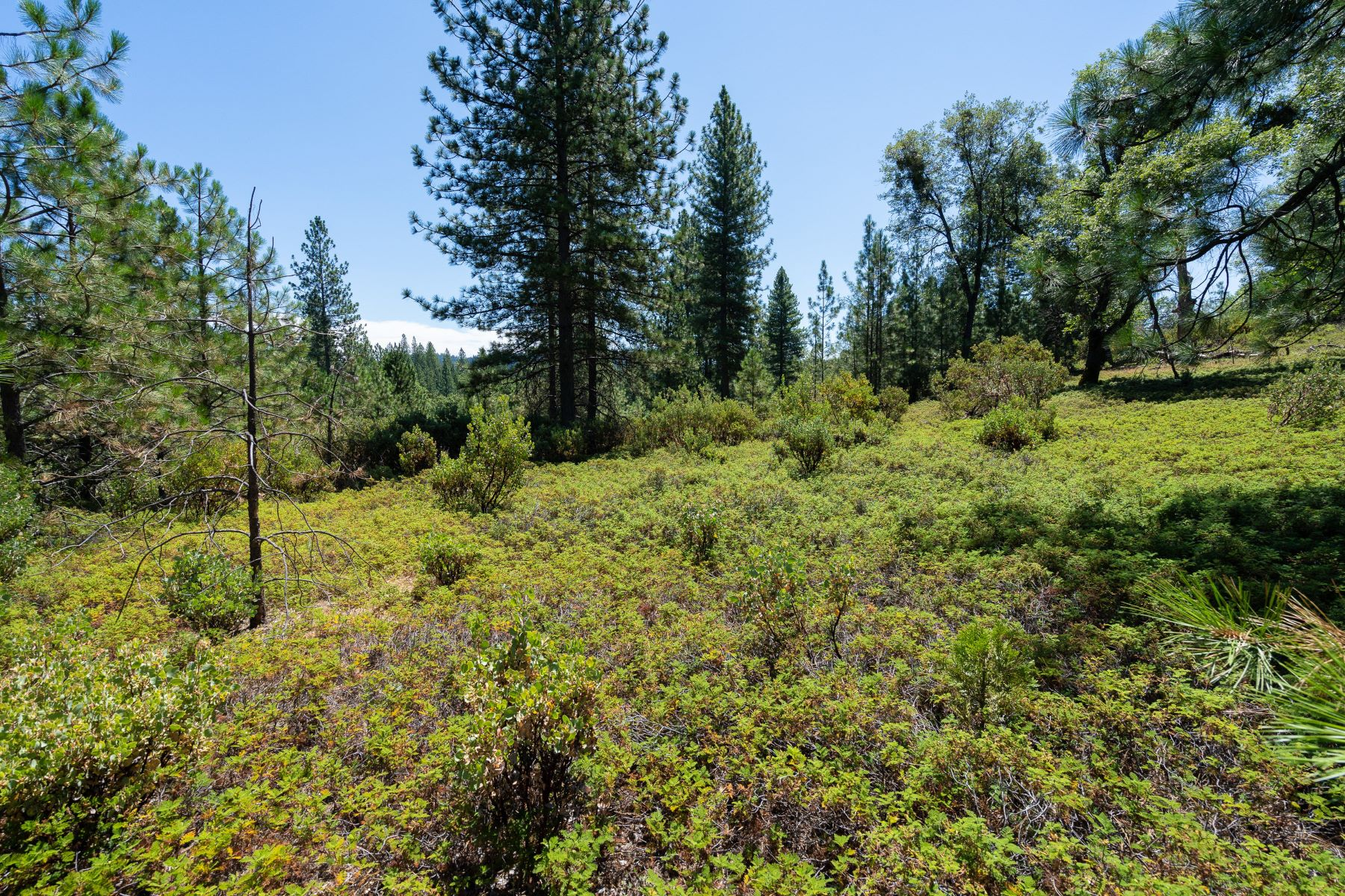 Land for Sale at Perfect For Vacation/Retirement Or Live Year-Round 17050 Alicia Drive Pioneer, California 95666 United States