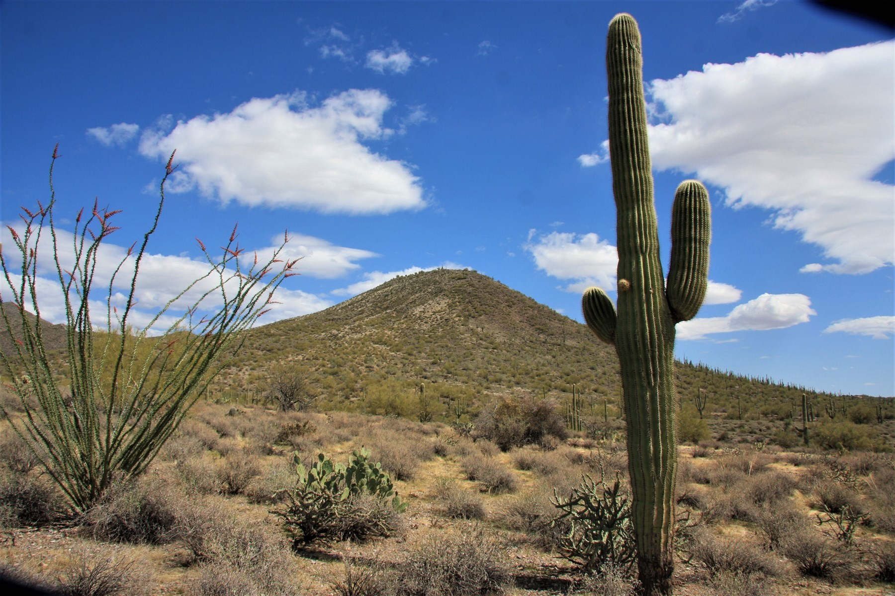 Land for Active at 220 Acres of Private Sonoran Desert 0 N 72 ST 0 Cave Creek, Arizona 85331 United States