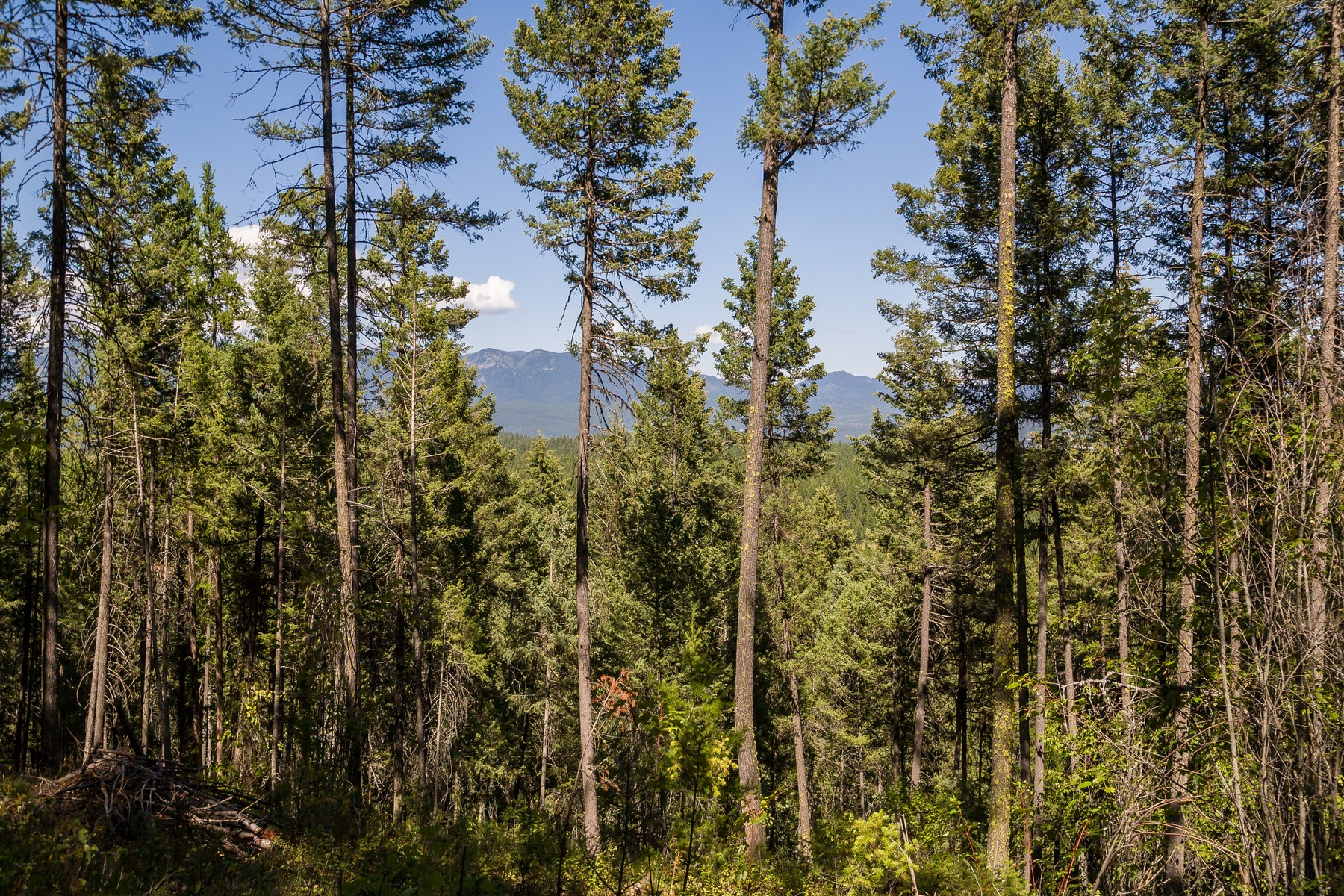 Additional photo for property listing at 828 Whitefish Ranch Road, Lot 6, Whitefish, MT 599 828  Whitefish Ranch Rd Lot 6 Whitefish, Montana 59937 United States
