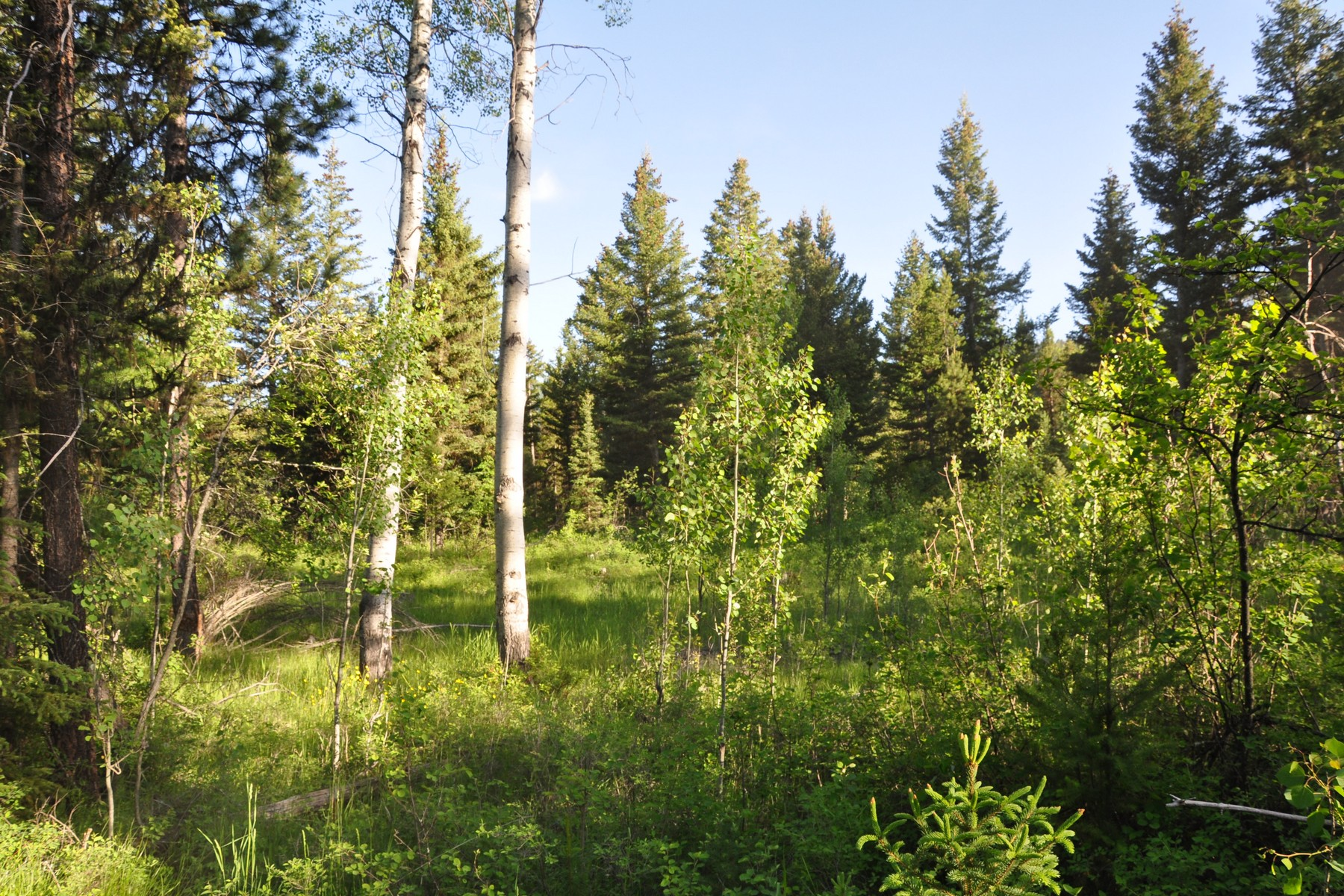 Additional photo for property listing at Nhn Us Hwy 2 W, Marion, MT 59925 Nhn  Us Hwy 2   W Marion, Montana 59925 United States