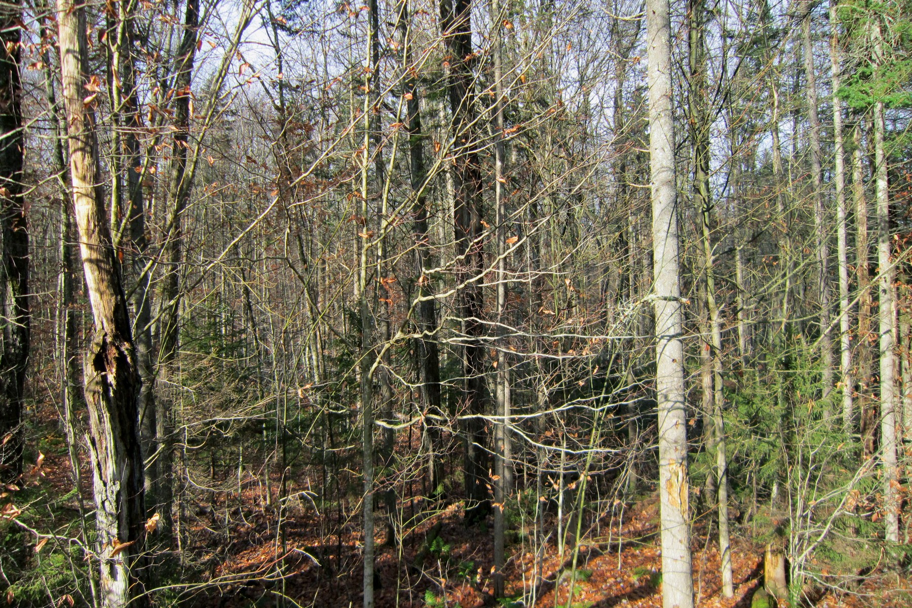 Land for Sale at Level Lot in Hawk Resort Hawk Spur Road Lot 2 Plymouth, Vermont 05056 United States