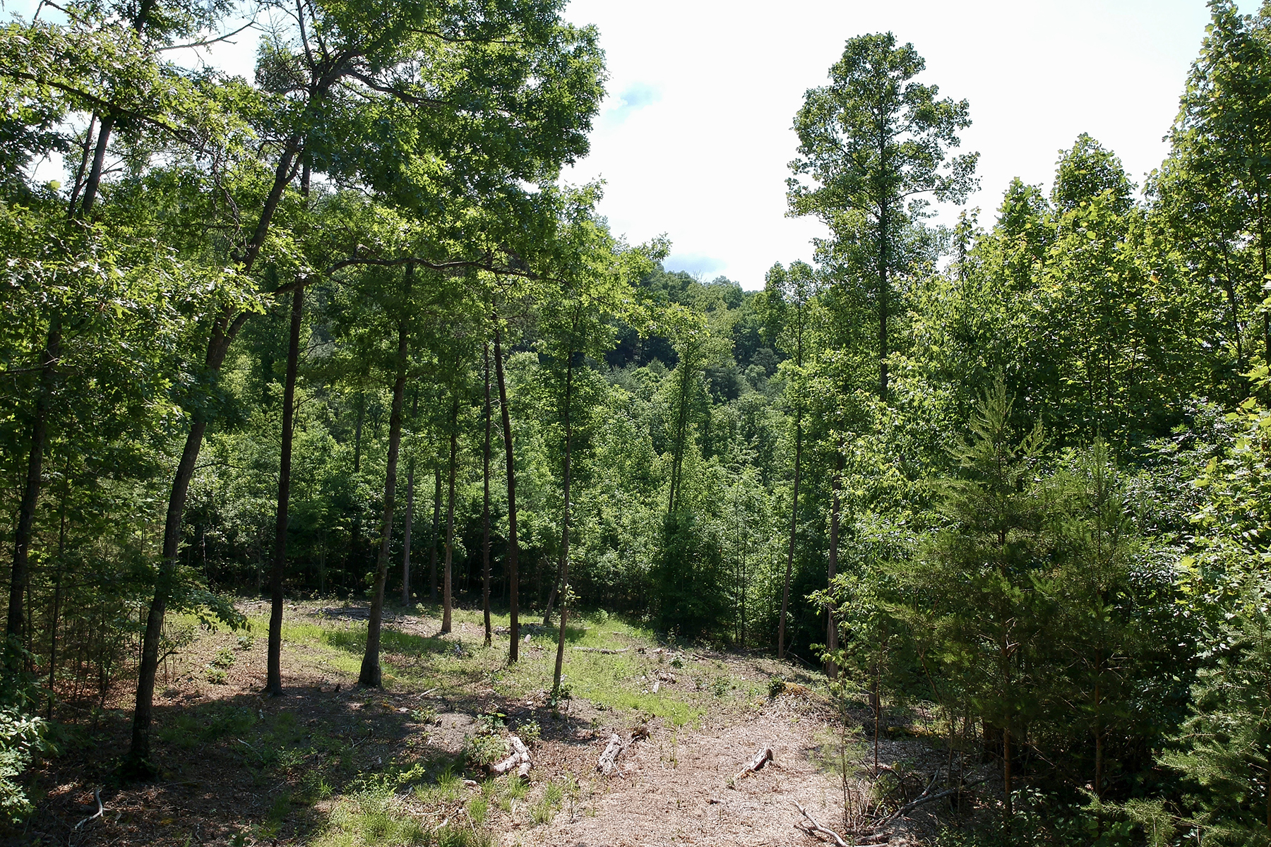 Land for Sale at FRENCH BROAD CROSSING 225 Red Fox Trl , 17 Bluffs, Marshall, North Carolina 28753 United States