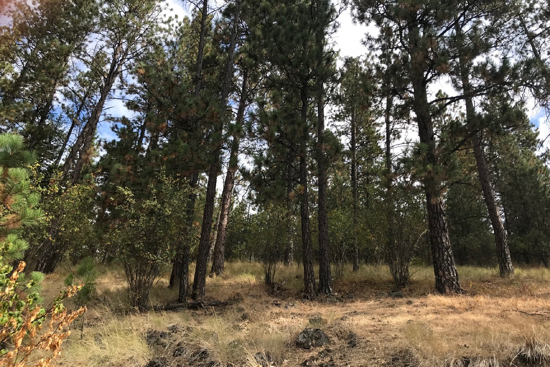 Land for Active at Walking Distance to Downtown Harrison 213 Prospect Ave Harrison, Idaho 83833 United States
