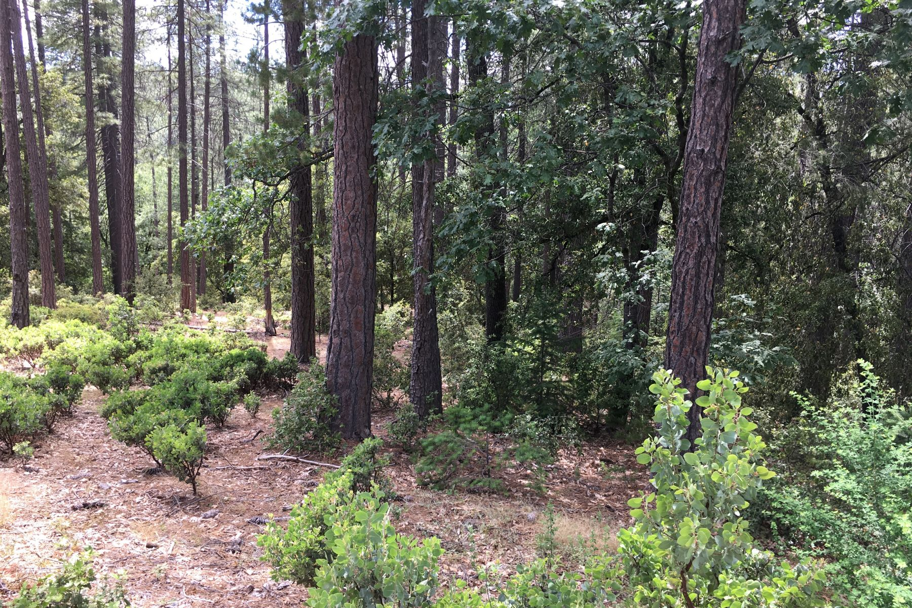 Land for Sale at Beautiful 2.3 Acre Secluded Lot in Ponderosa Ridge 13475 Paintbrush Lane Pine Grove, California 95665 United States