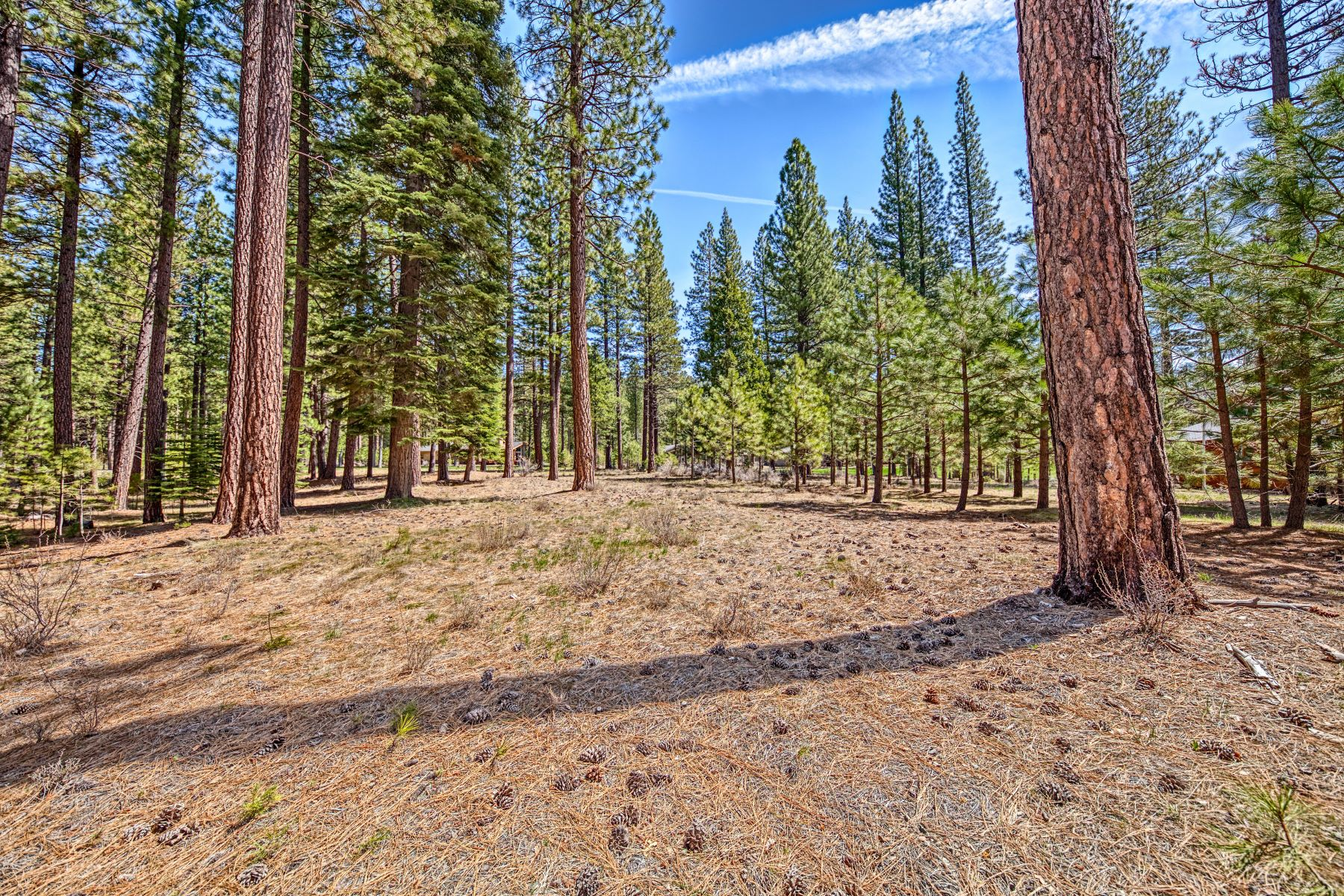 Terreno por un Venta en 148 Black Bear Trail, Clio, CA 96106 148 Black Bear Trail Clio, California 96106 Estados Unidos