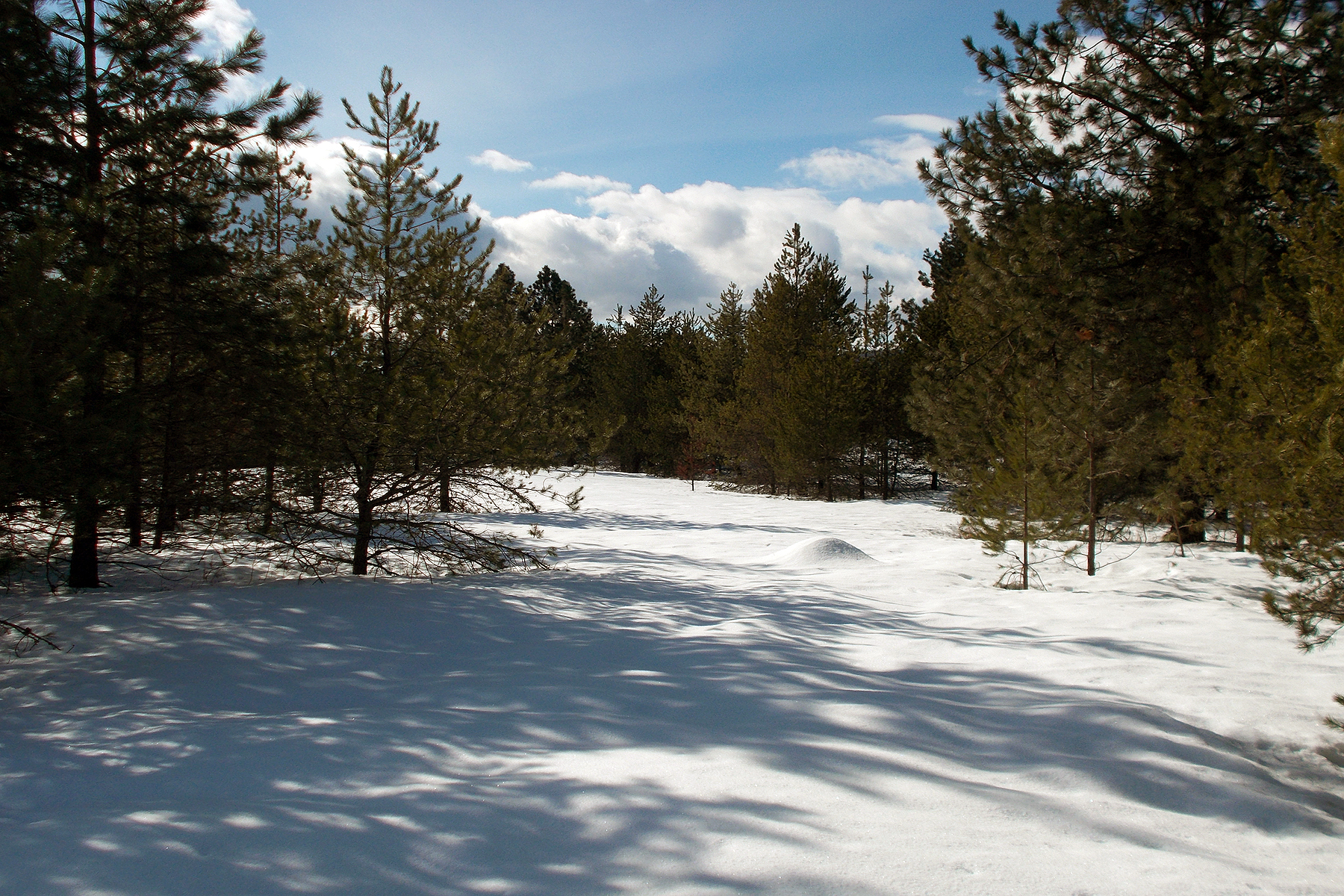 sales property at Beautiful 10+ acre property in the Sagle area
