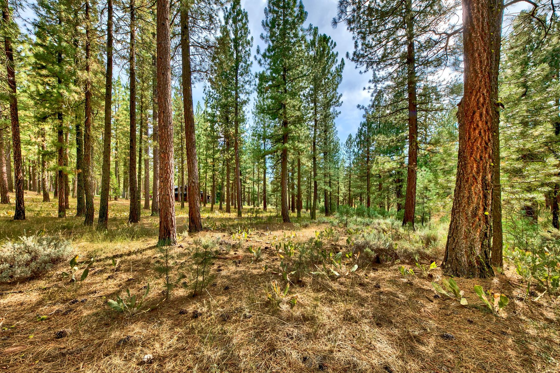 Land for Active at 5 Acres in Plumas County 4988 Grizzly Road Portola, California 96122 United States