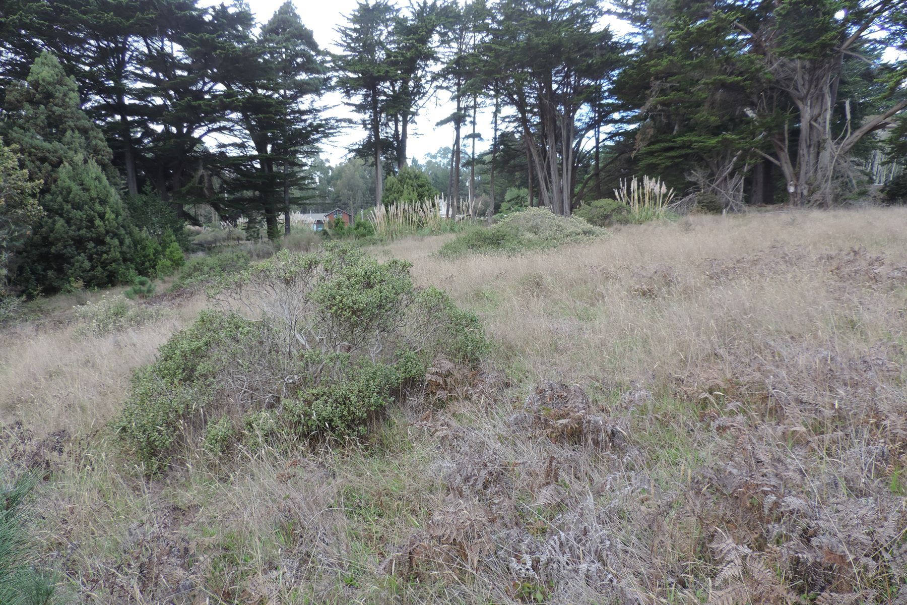 Additional photo for property listing at Little River Cove 8150 N. Highway One Little River, California 95456 United States