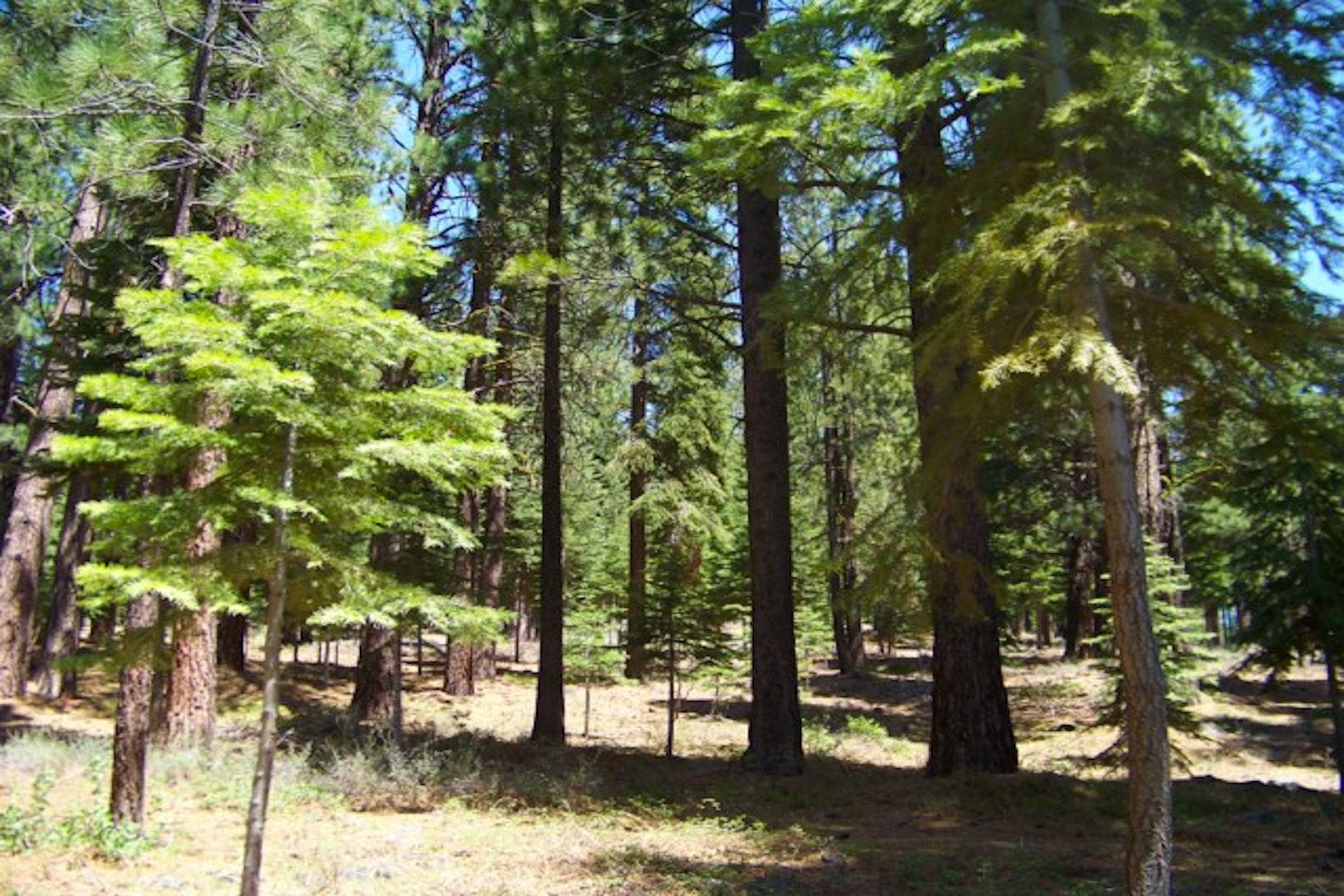 Additional photo for property listing at 12636 Granite Drive, Truckee CA 96161 12636 Granite Drive Truckee, California 96161 United States