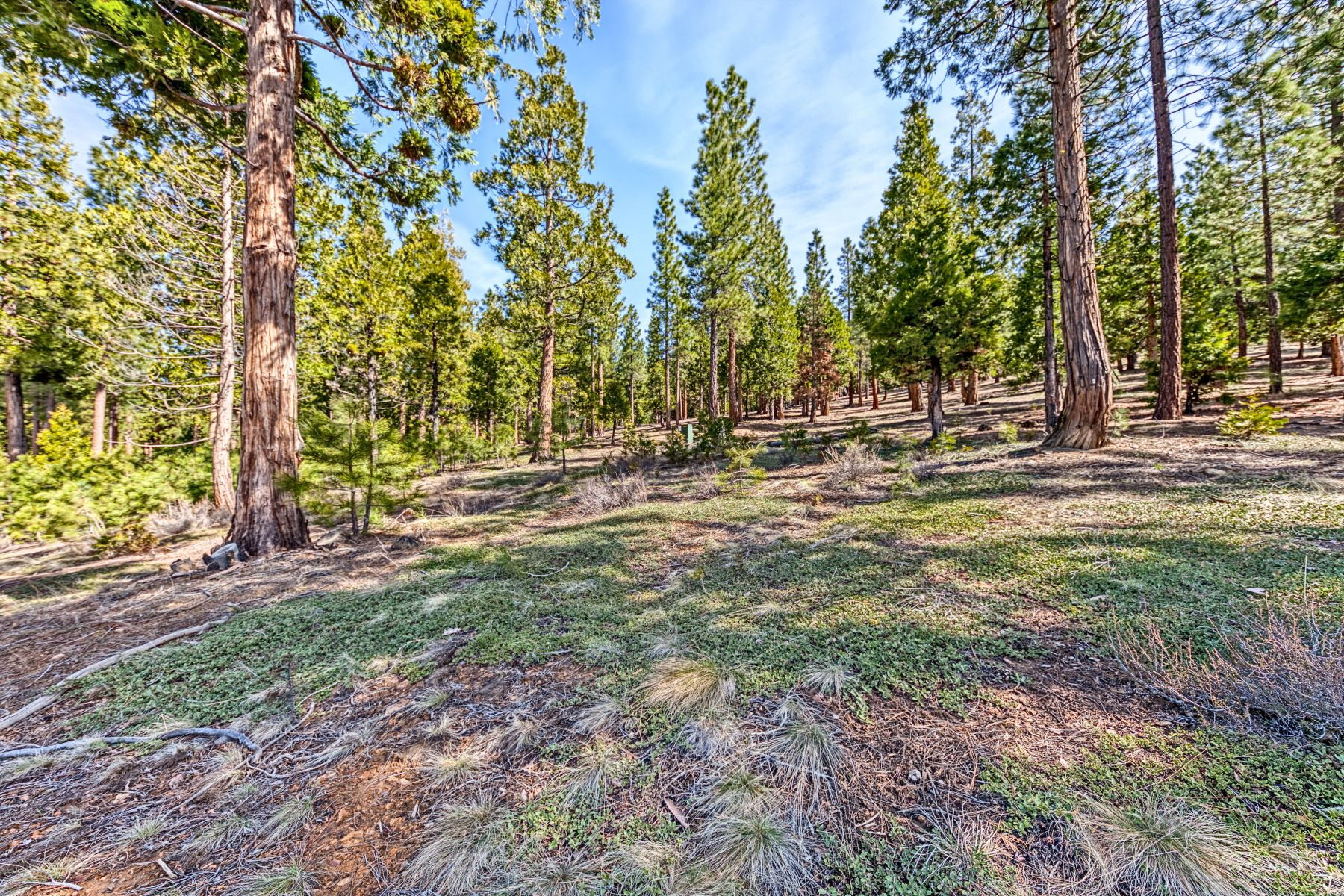 Additional photo for property listing at 696 Blacktail Ridge, Portola, CA, 96122 696 Blacktail Ridge Portola, California 96122 Estados Unidos