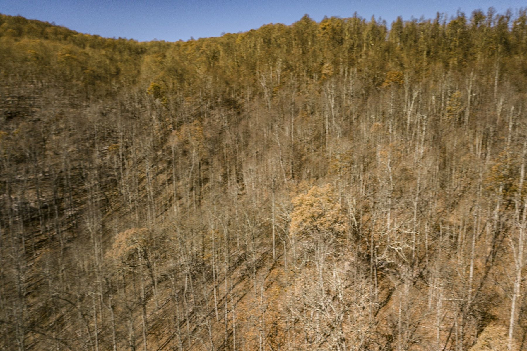 Land for Sale at 0 Pond Road, Spruce Pine, NC 0 Pond Road Spruce Pine, North Carolina 28777 United States