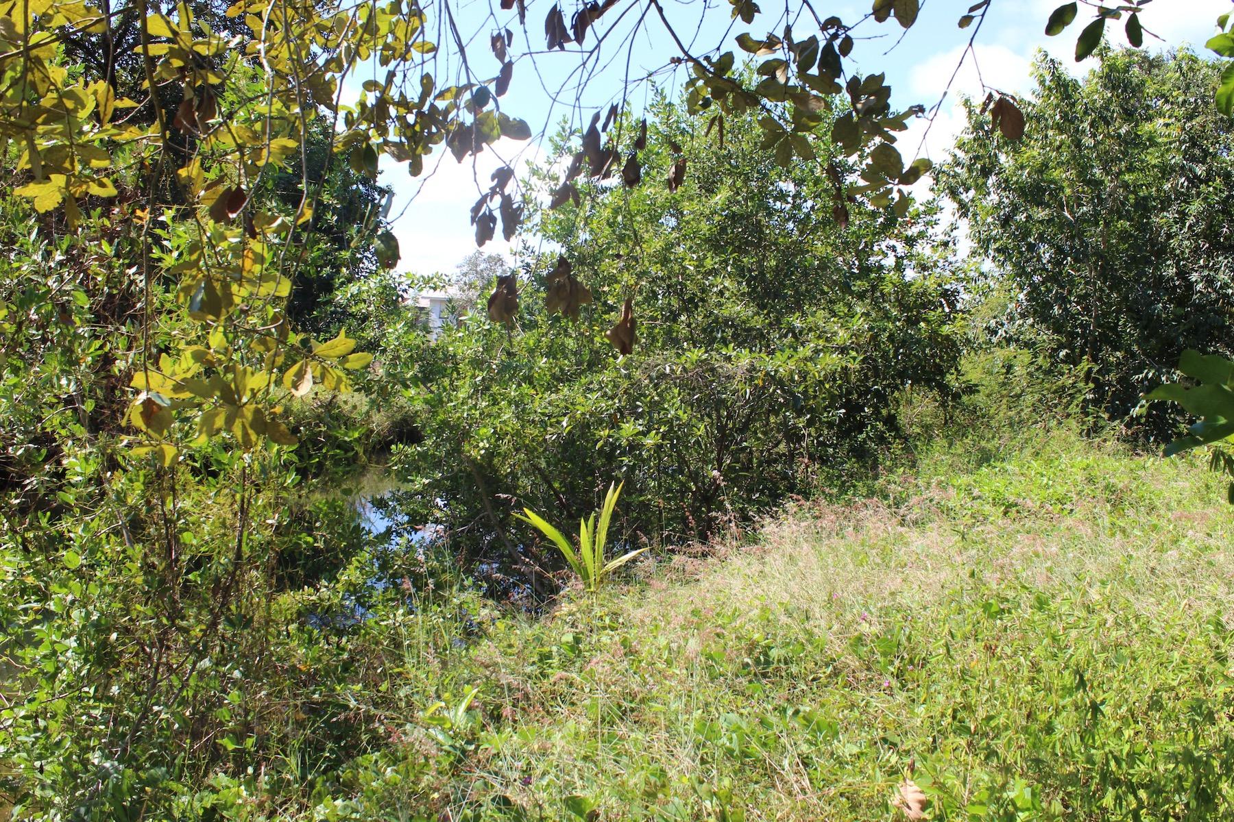 土地,用地 为 销售 在 Canal acreage 普拉圣西亚, 斯坦克里克, 伯利兹